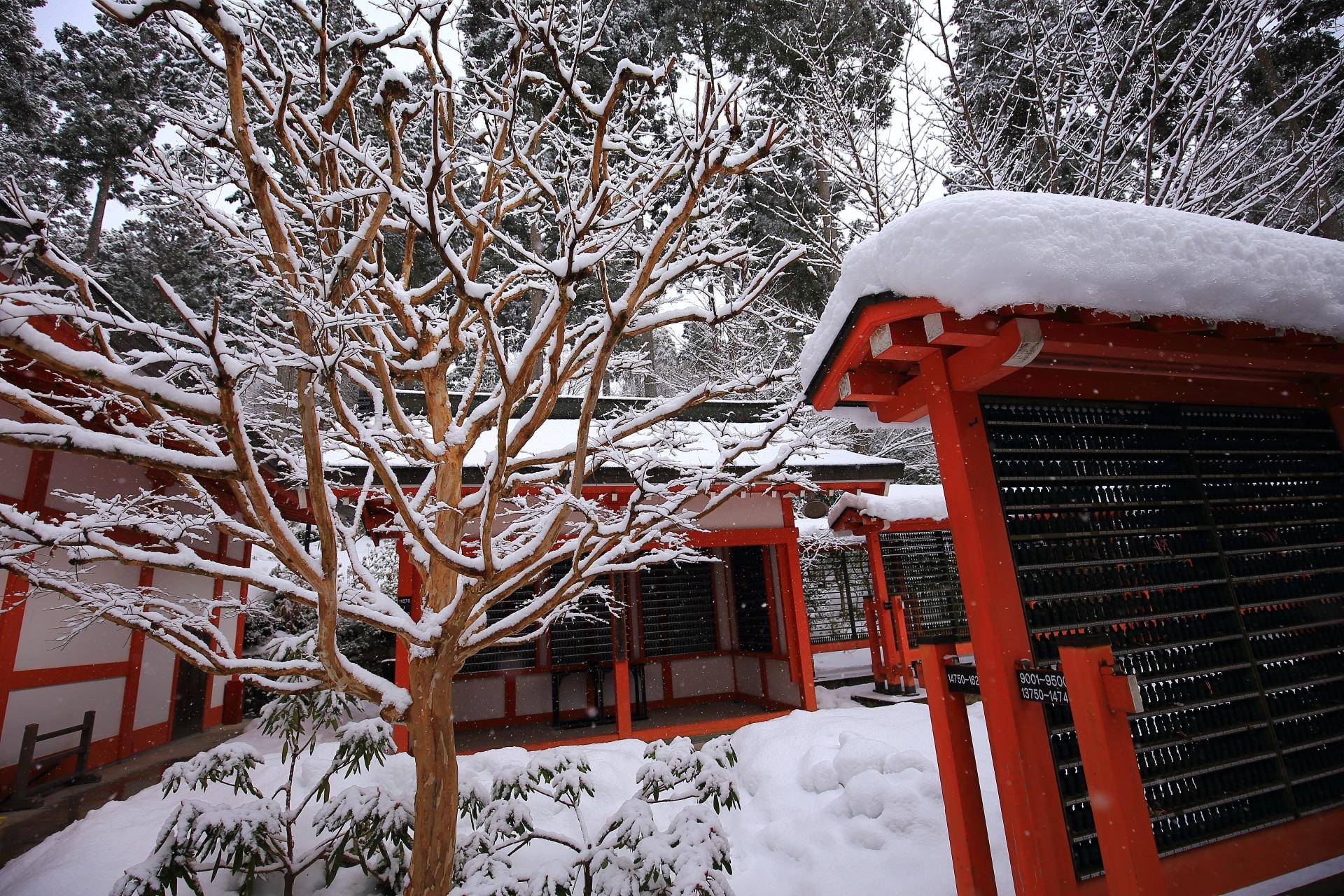 綺麗な雪の花が咲く冬の大原三千院