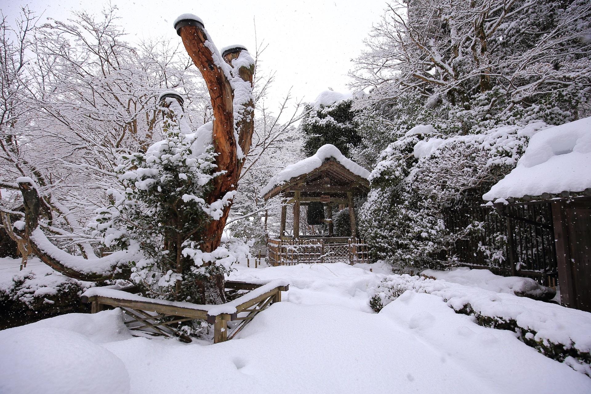 千年姫小松の雪景色