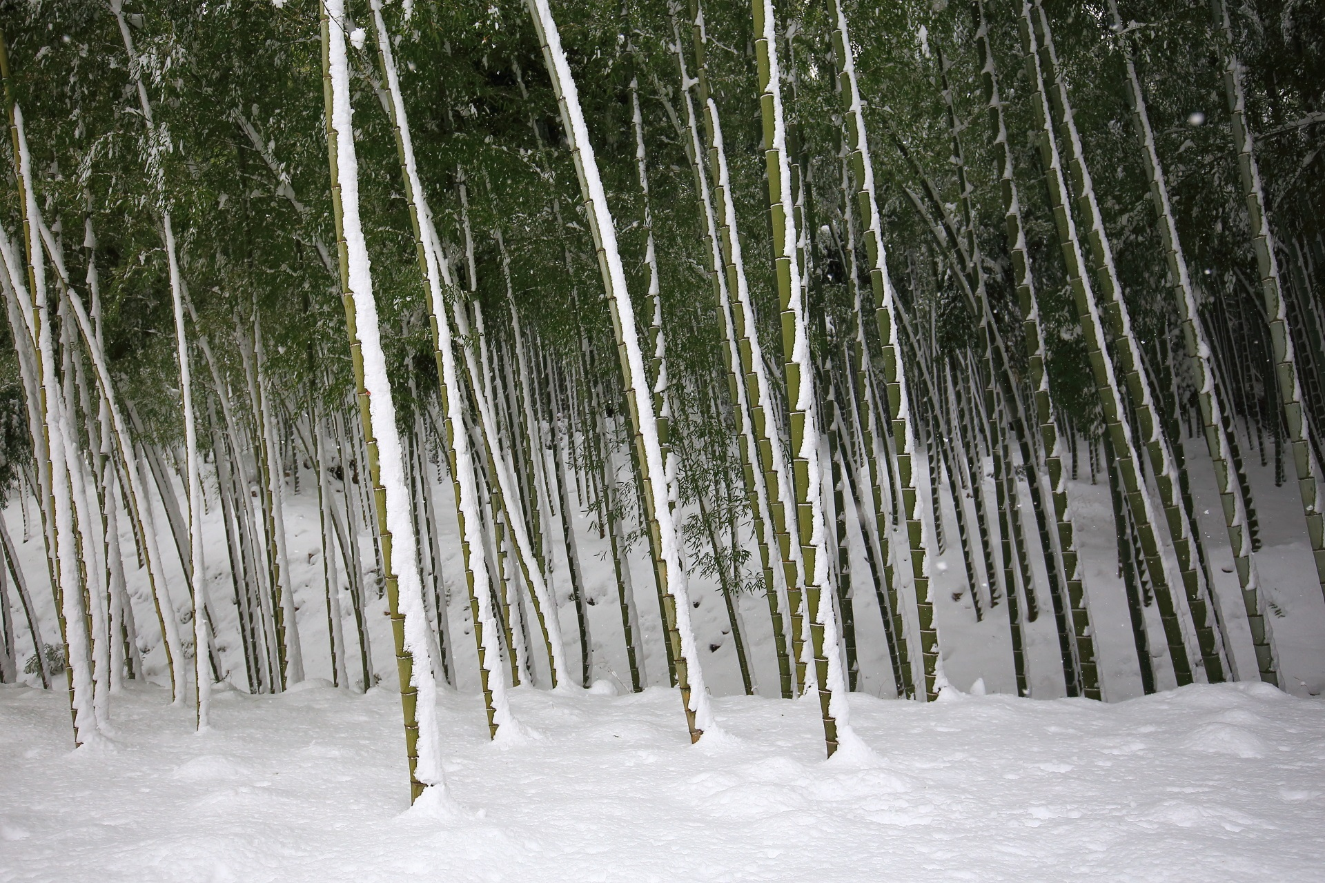 天龍寺の竹林の雪景色