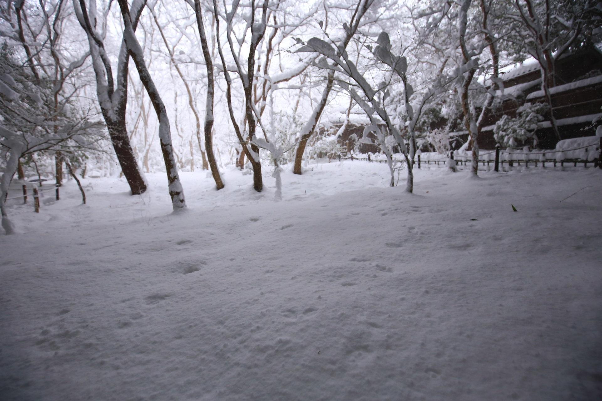 祇王寺のふかふかの雪の白い絨毯
