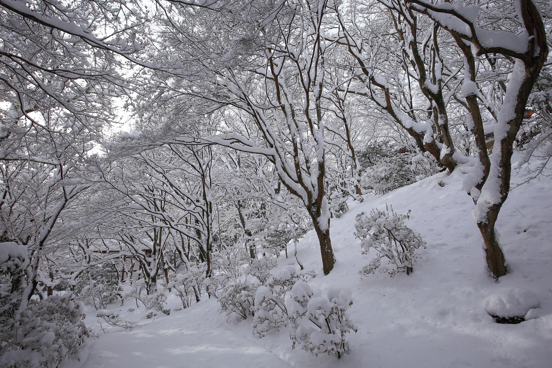 常寂光寺の幻想的で神秘的な雪の情景