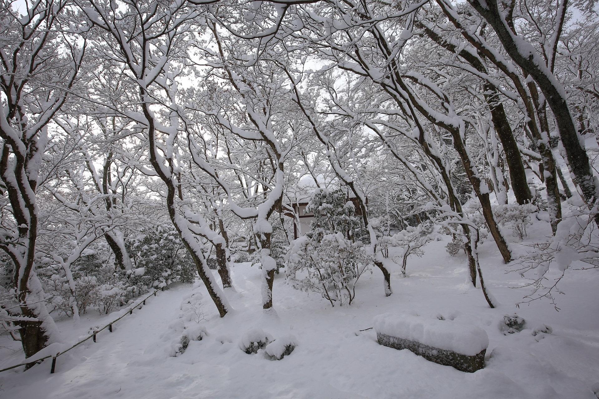 華やかな雪の花が満開の常寂光寺