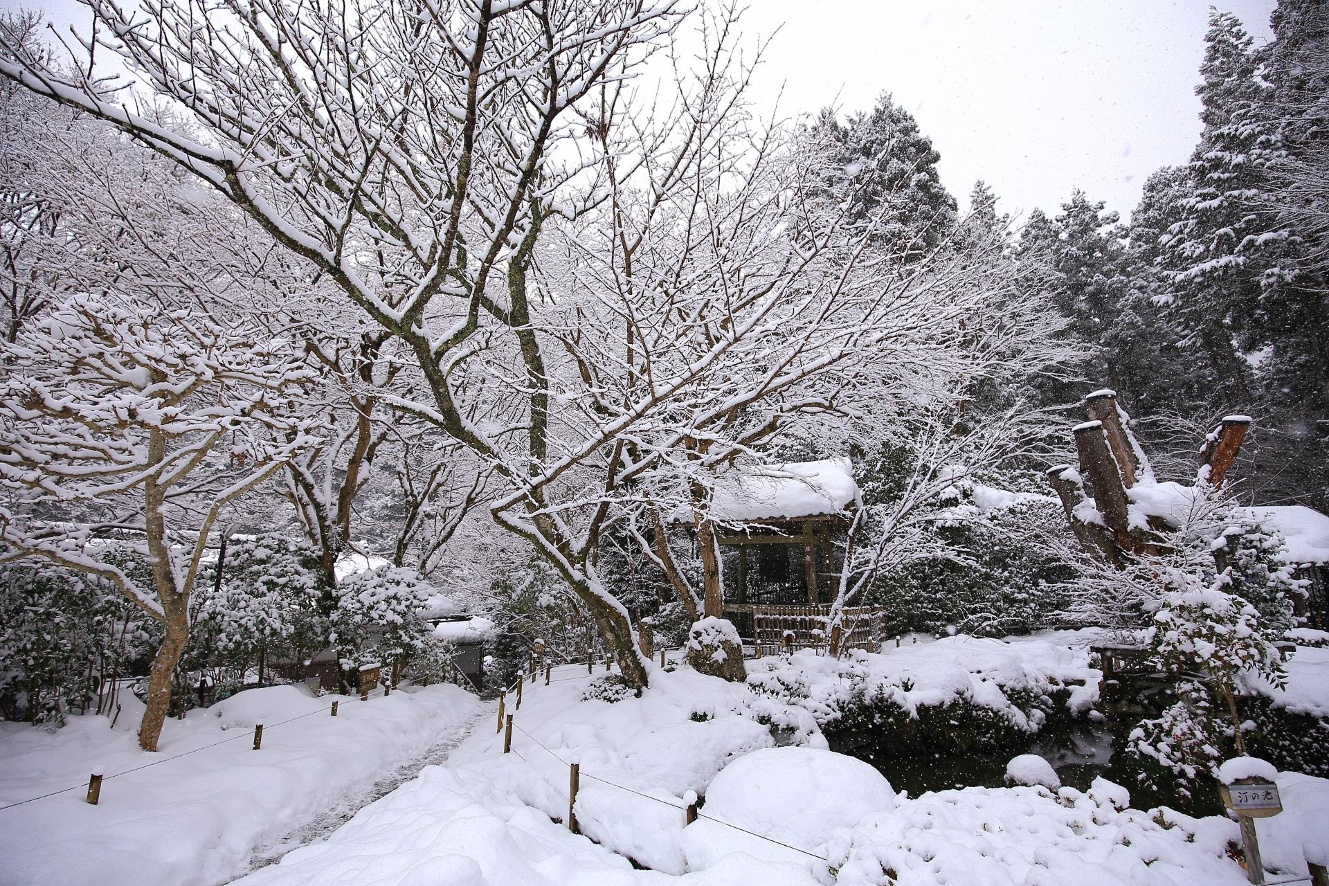 雪の千年姫小松と汀の池と鐘楼
