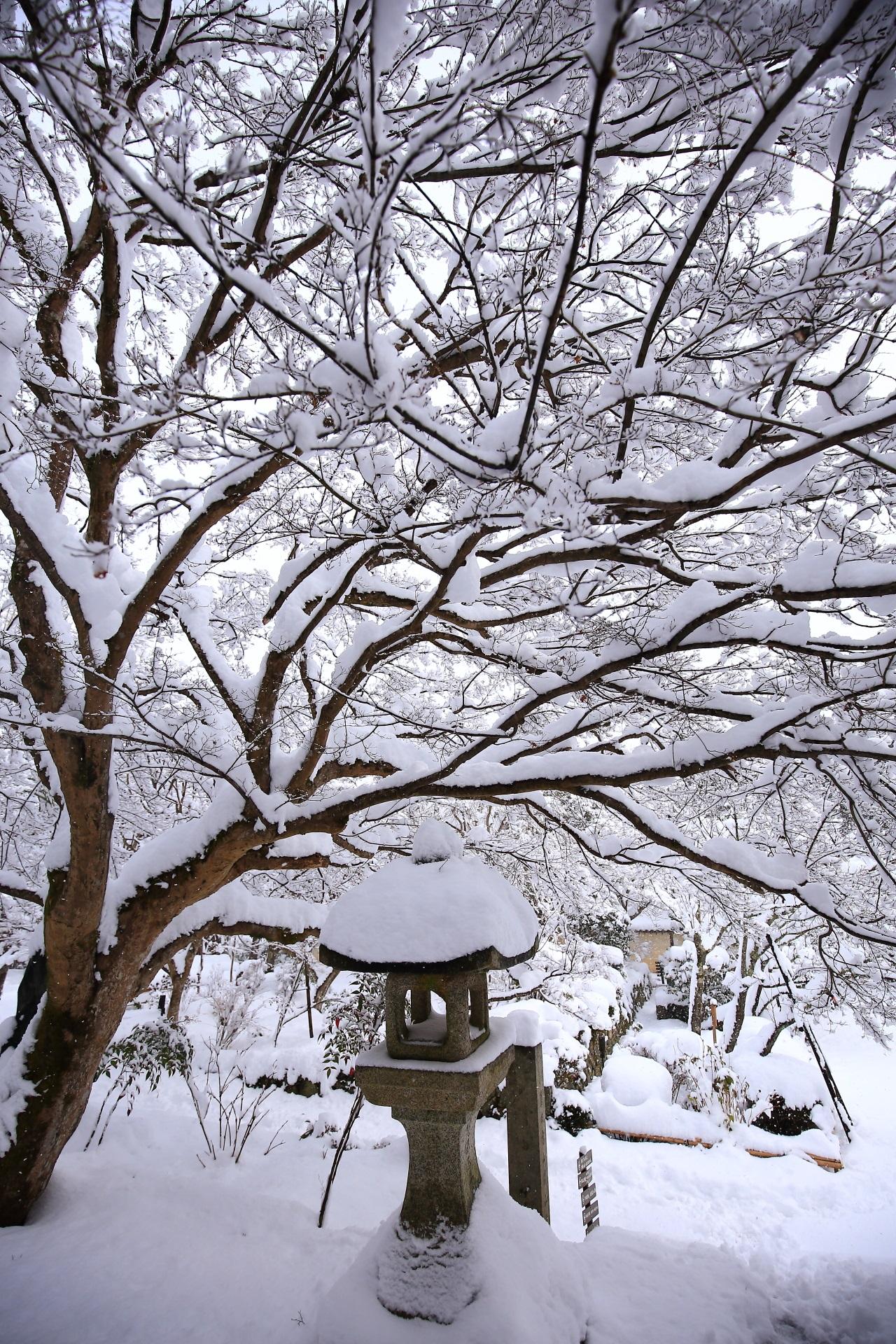 上までびっしり白い雪が積もった二尊院