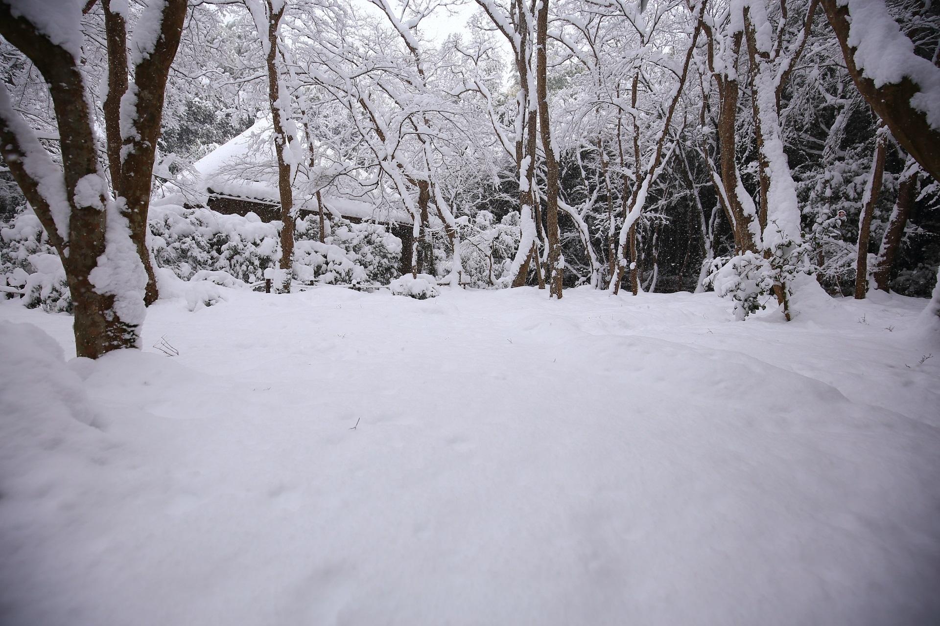 真っ白に染まった冬の祇王寺