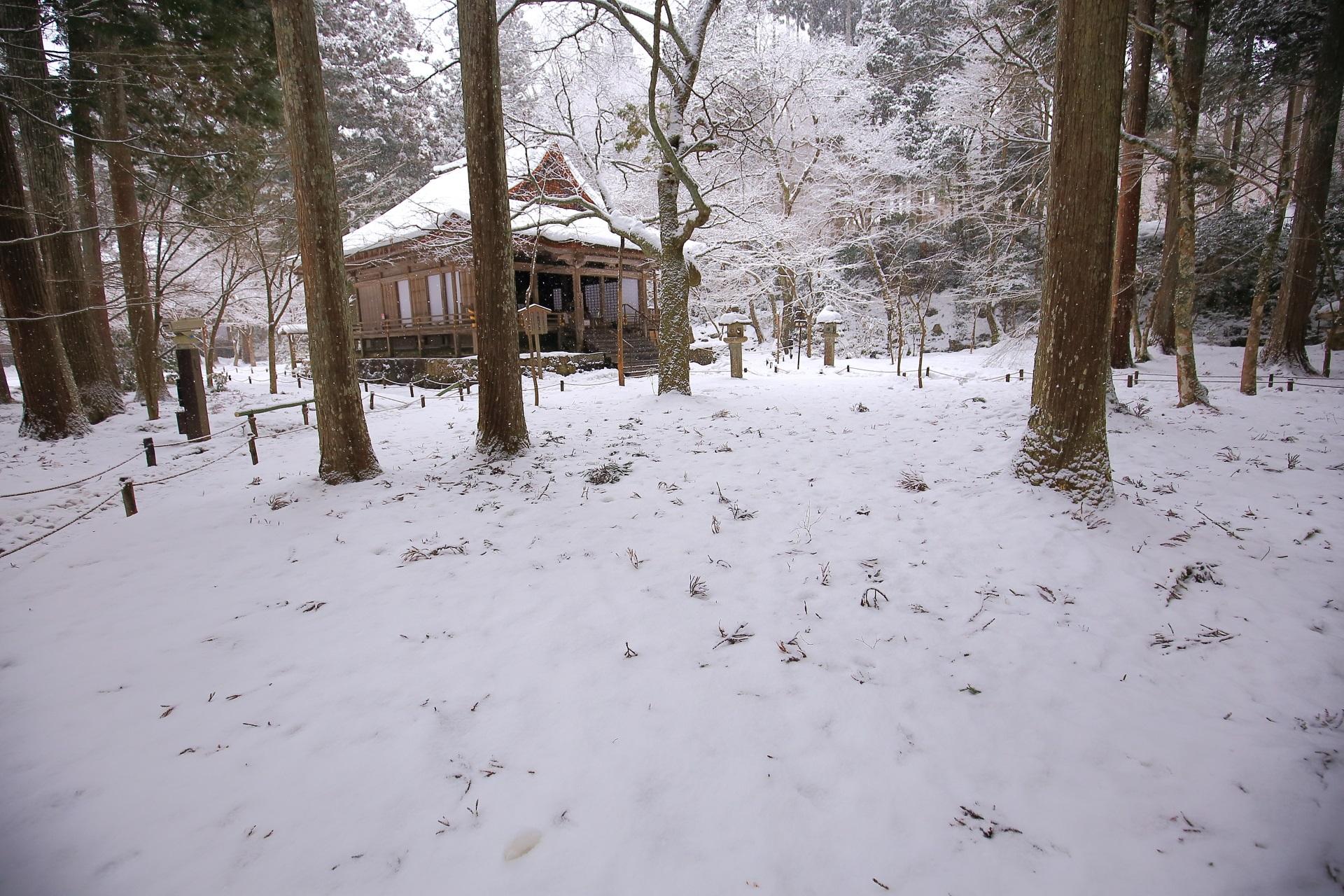 真っ白な雪に覆われた三千院の庭園