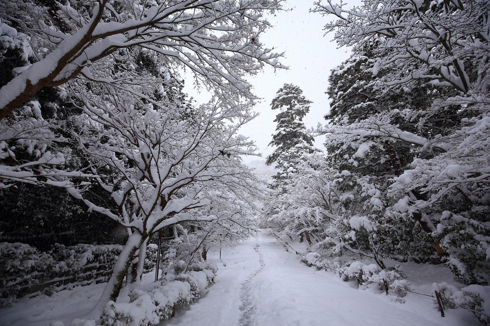 二尊院の参途の雪景色