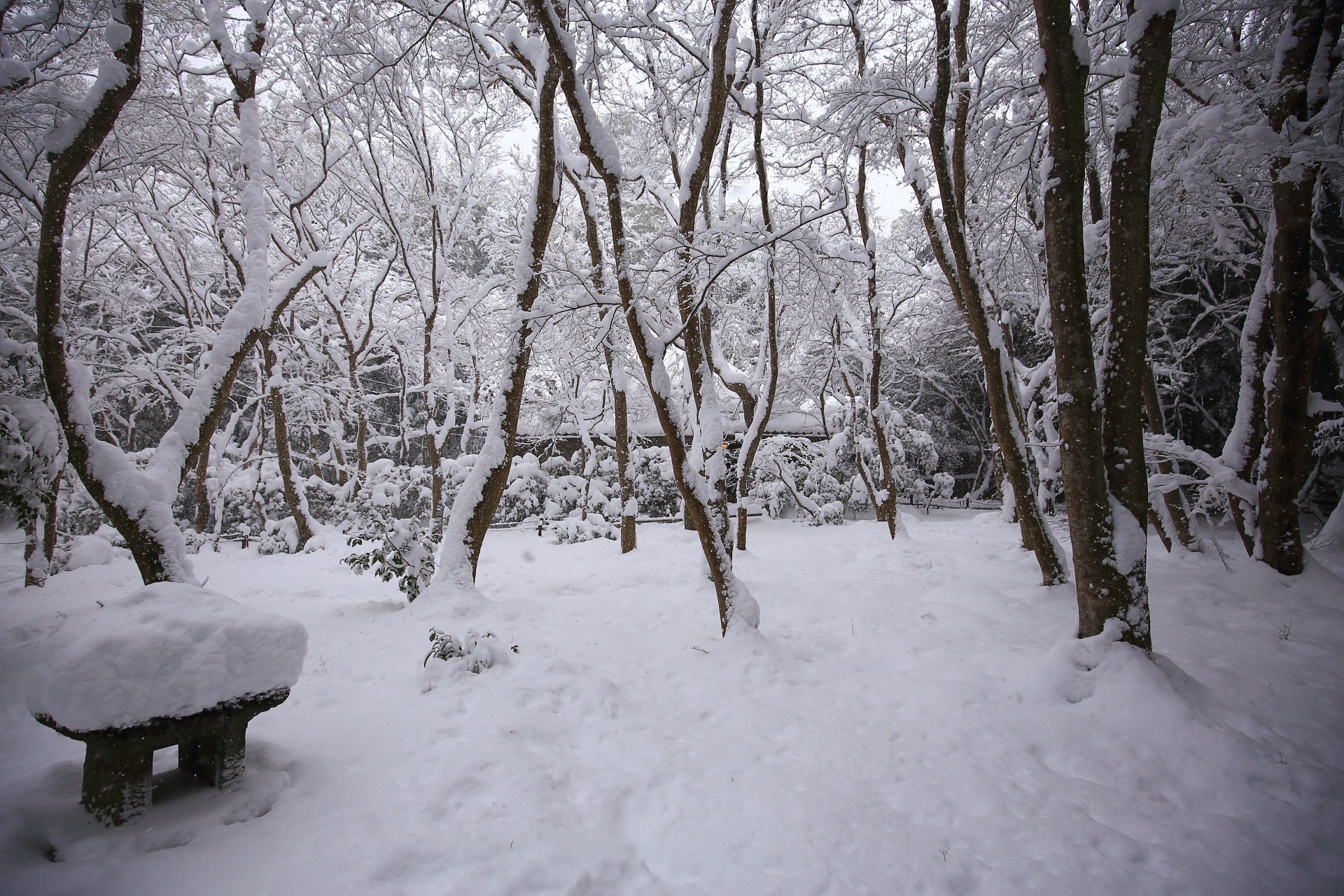 嵯峨野の祇王寺の庭園と草庵の雪景色