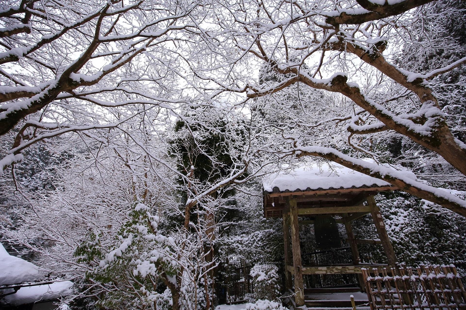 芸術的な枝と美しい雪の花が咲く寂光院