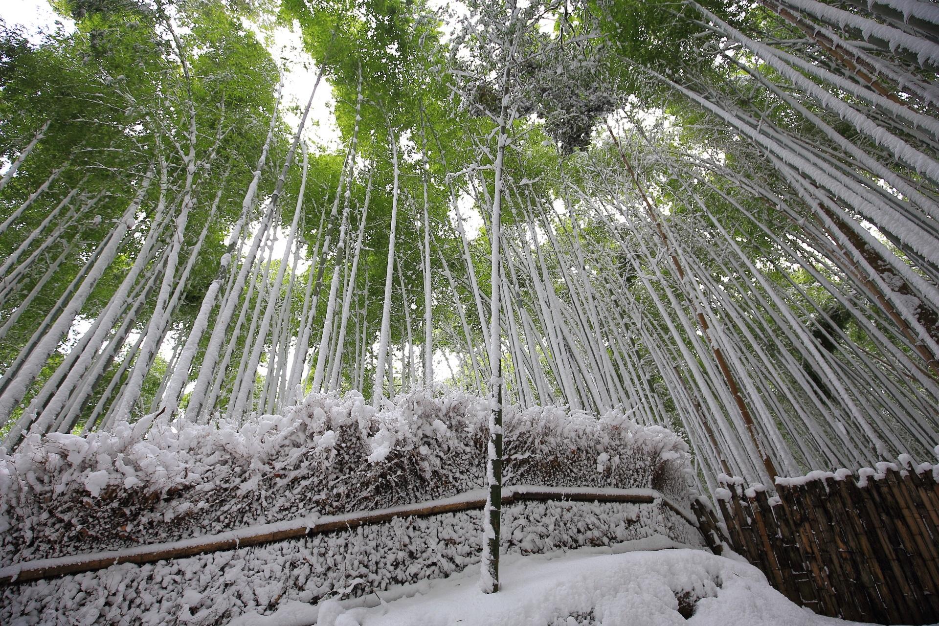 欧米では育たない神秘的な竹の雪景色