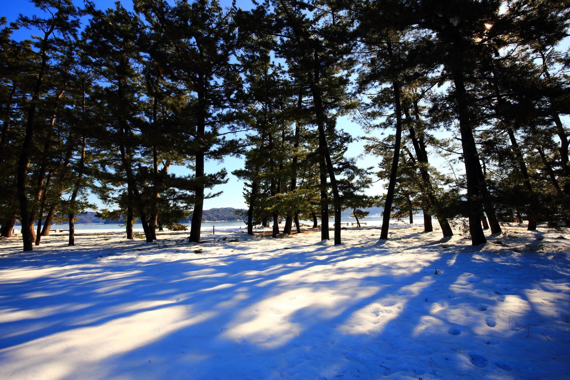 雪の木漏れ日