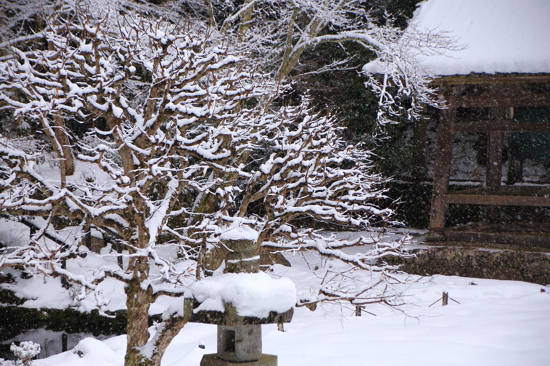 綺麗な雪の花が咲く勝林院