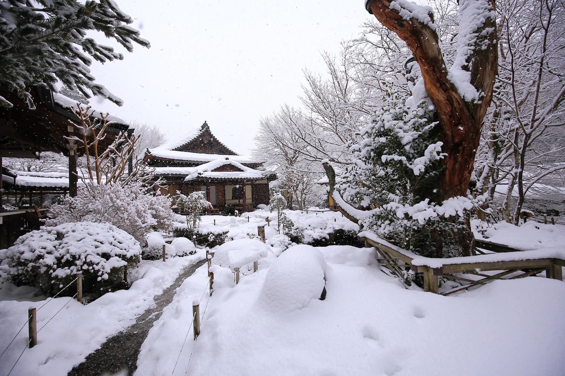 千年姫小松付近から眺めた一面の雪景色