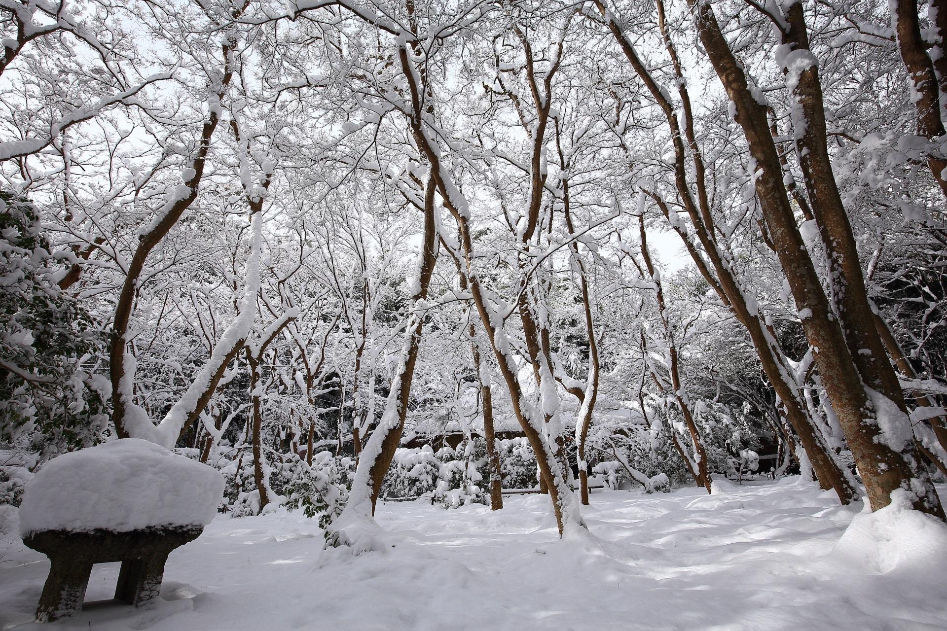 蟷螂にも雪がいっぱい積もった冬の祇王寺