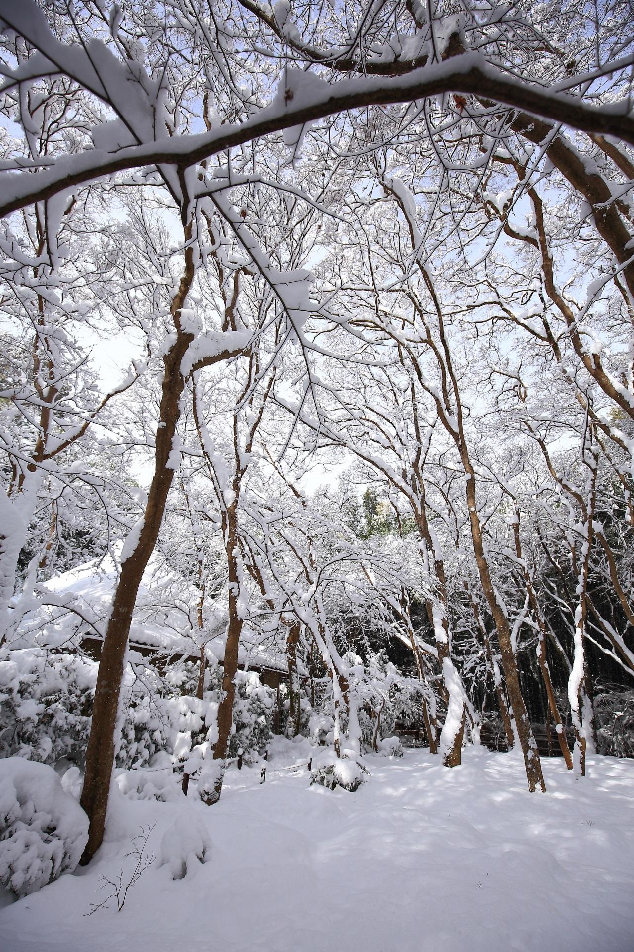 華やかな雪の花が満開の奥嵯峨の祇王寺