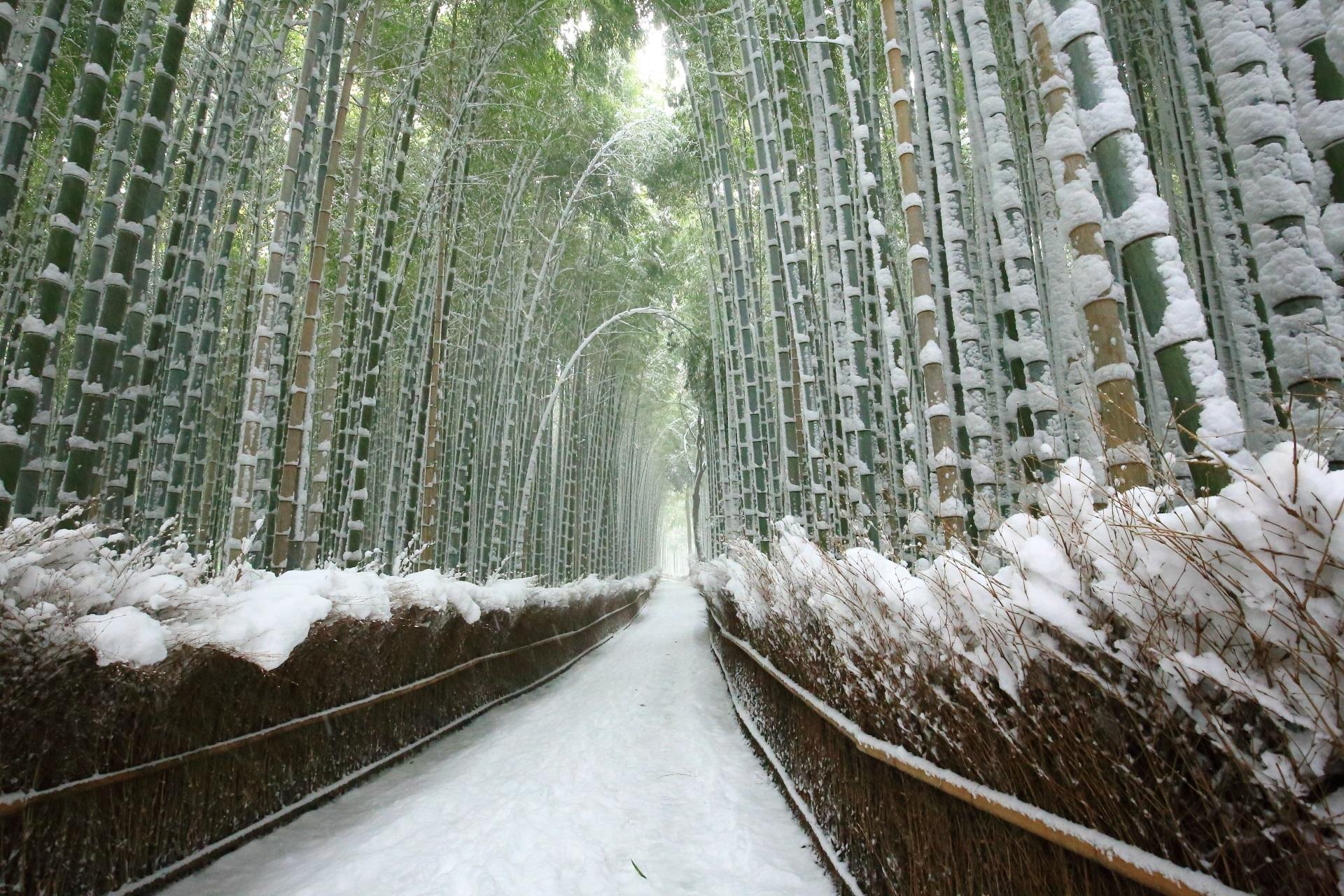 竹林の道 雪 京都嵯峨野 竹林の美しい冬景色