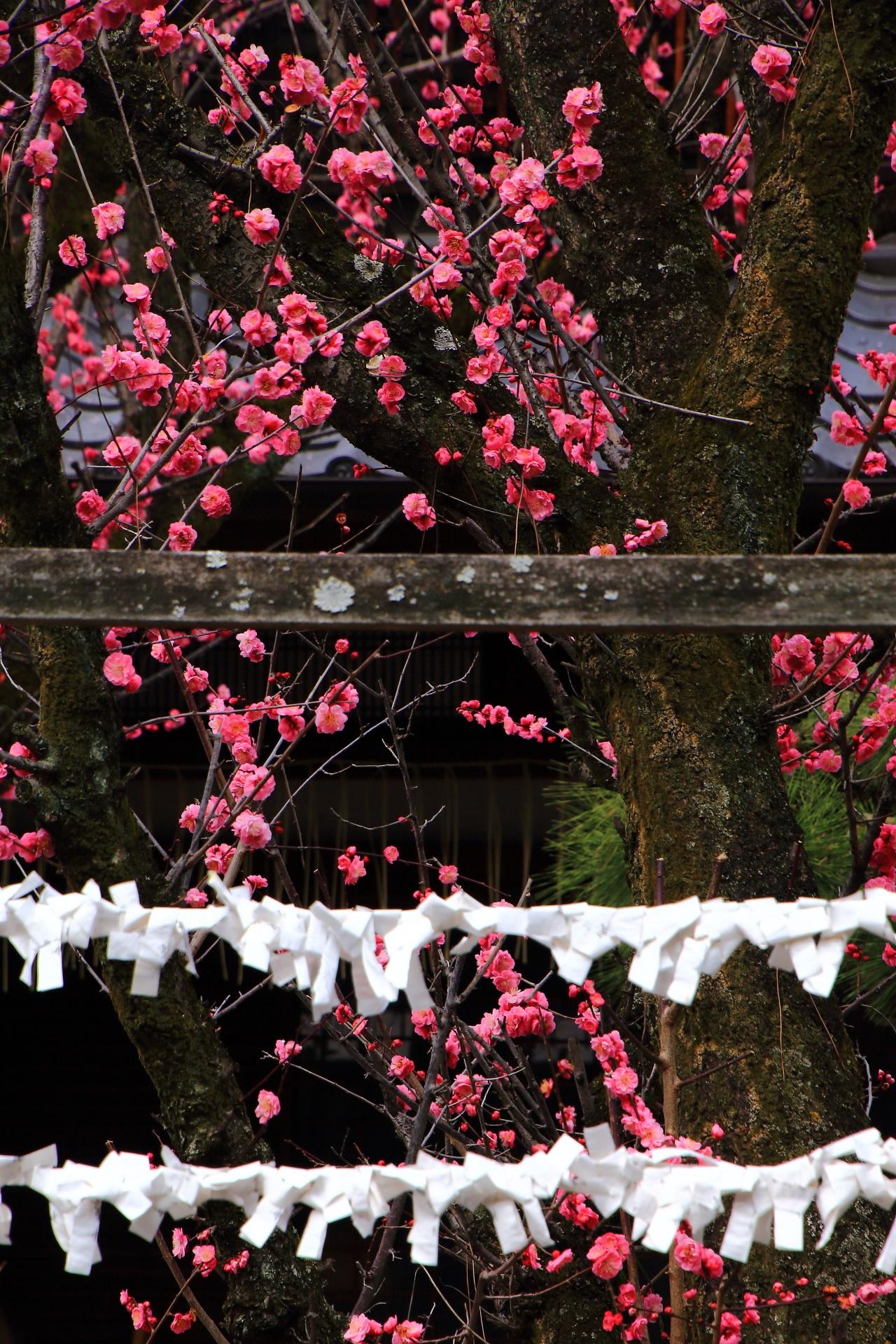 街中にある梅の隠れた名所