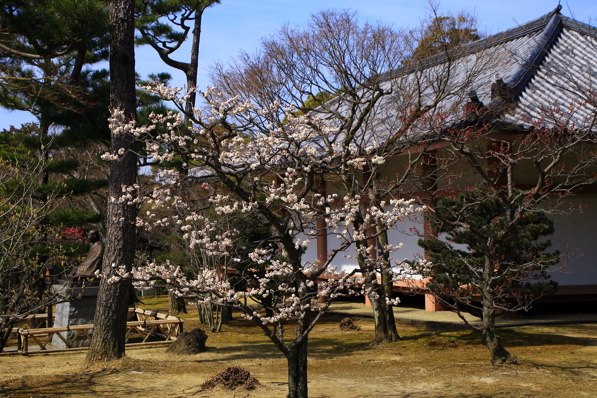 智積院の収蔵庫前の梅