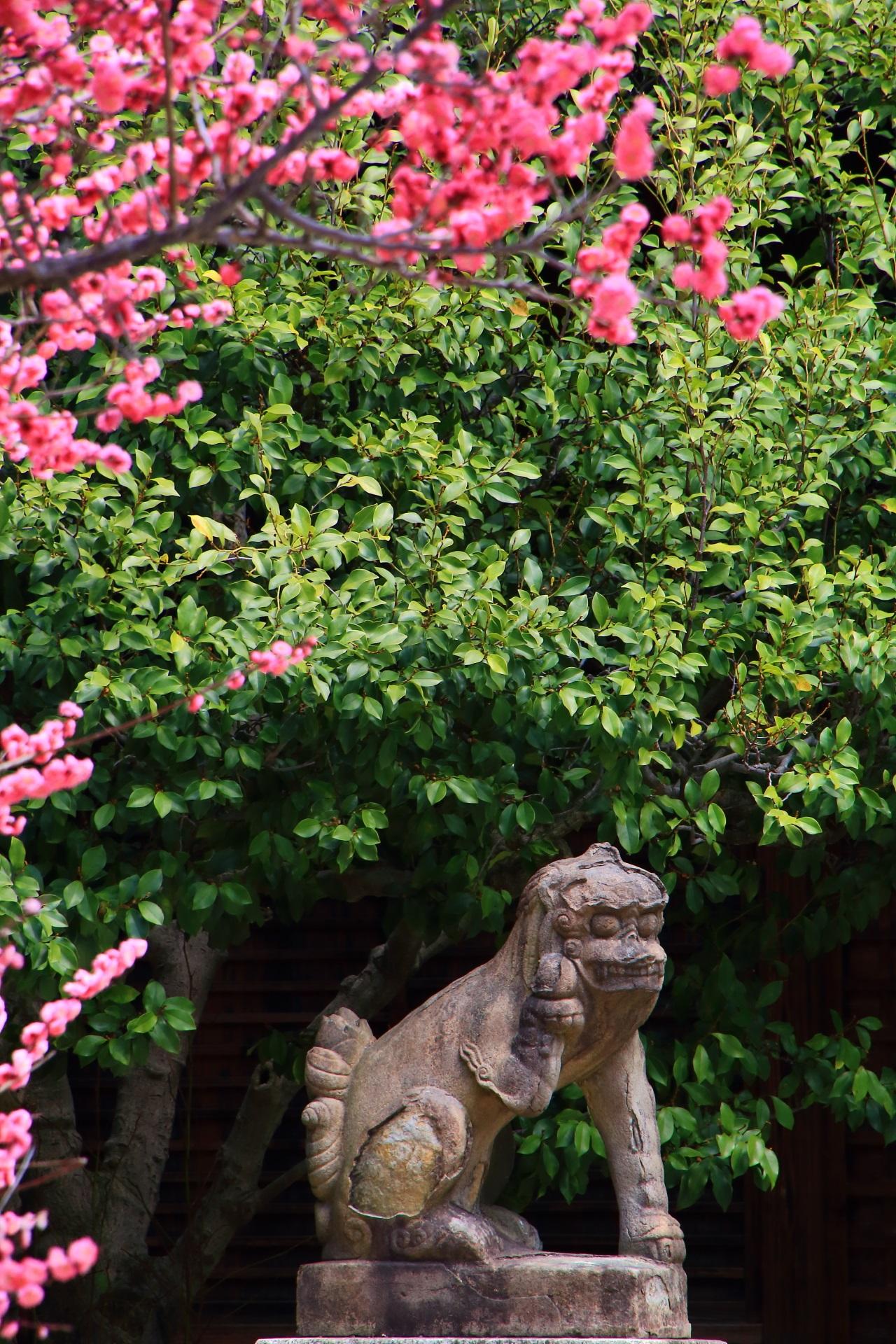 菅大臣神社の手招きをするユニークな狛犬