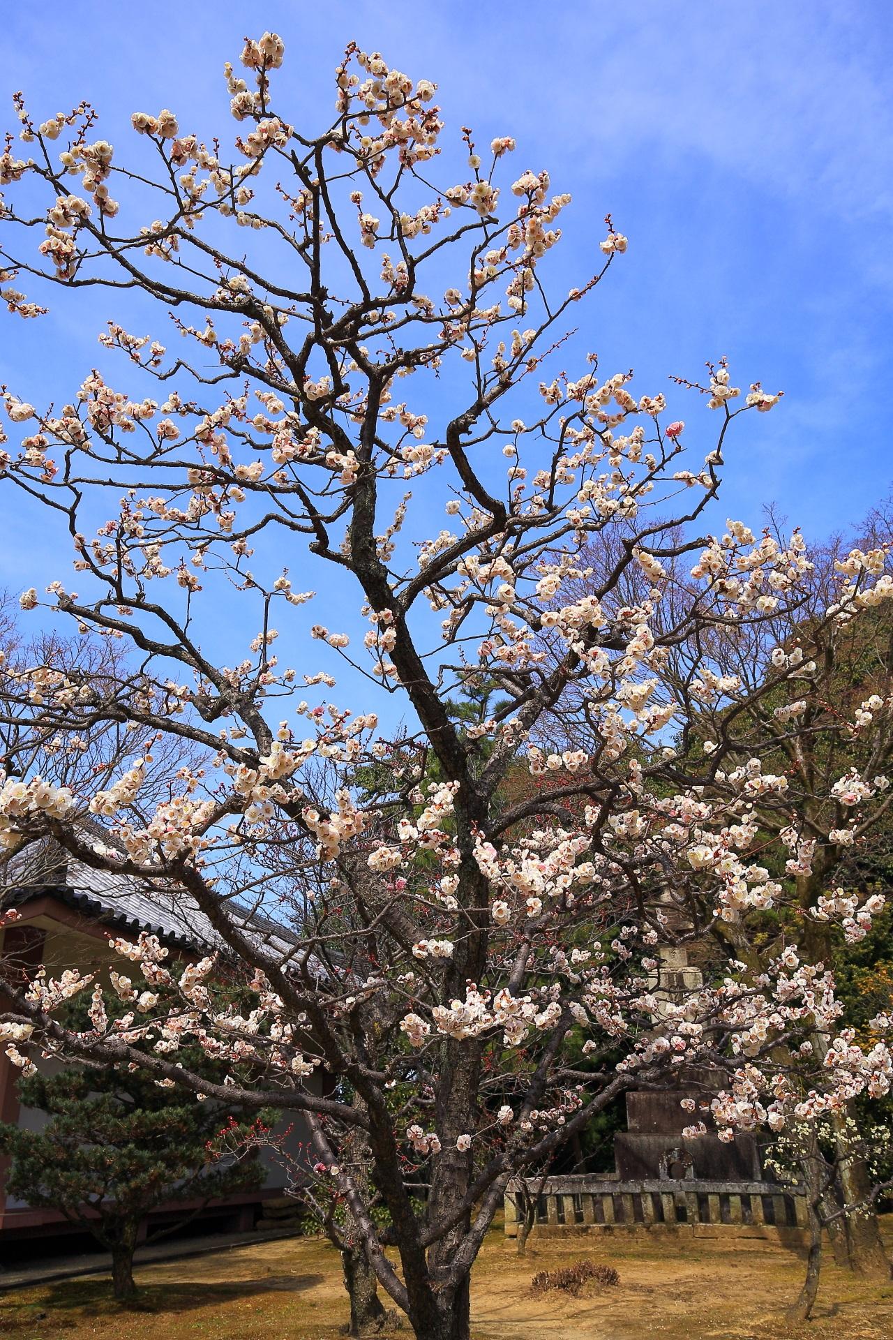 自然の造り出す芸術的な梅