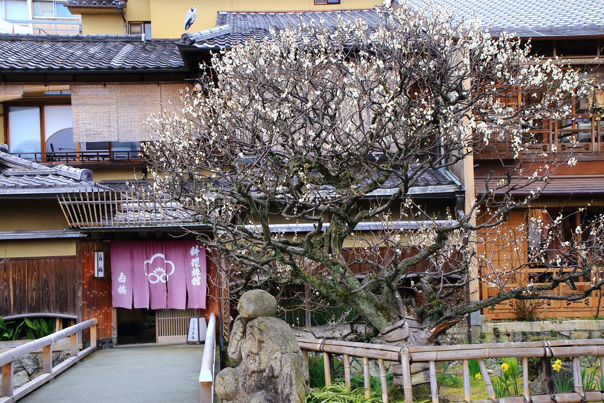 祇園白川の素晴らしい梅と風情ある街並み