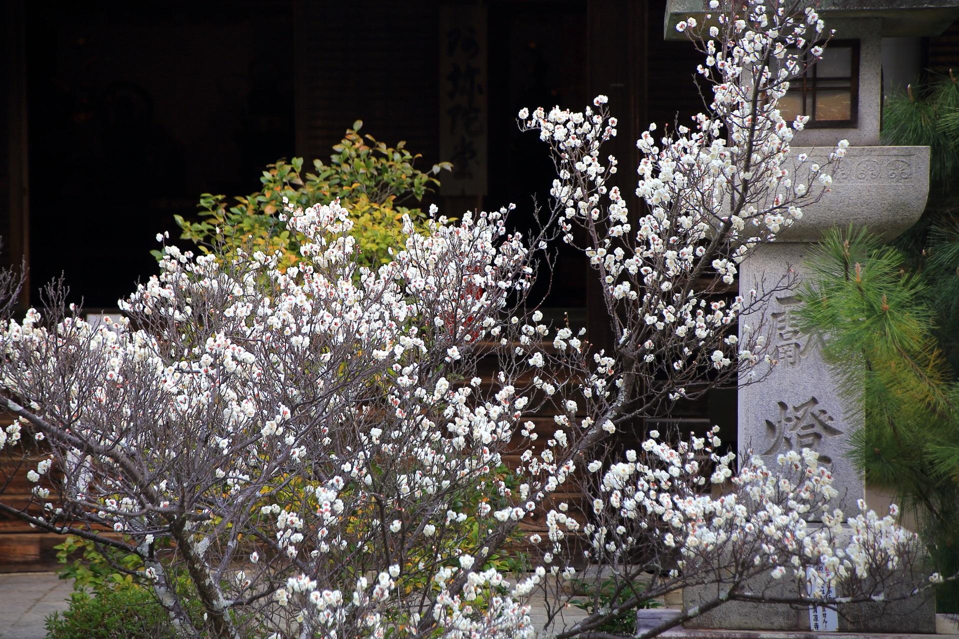 嵯峨釈迦堂の咲き誇る梅の花と蟷螂