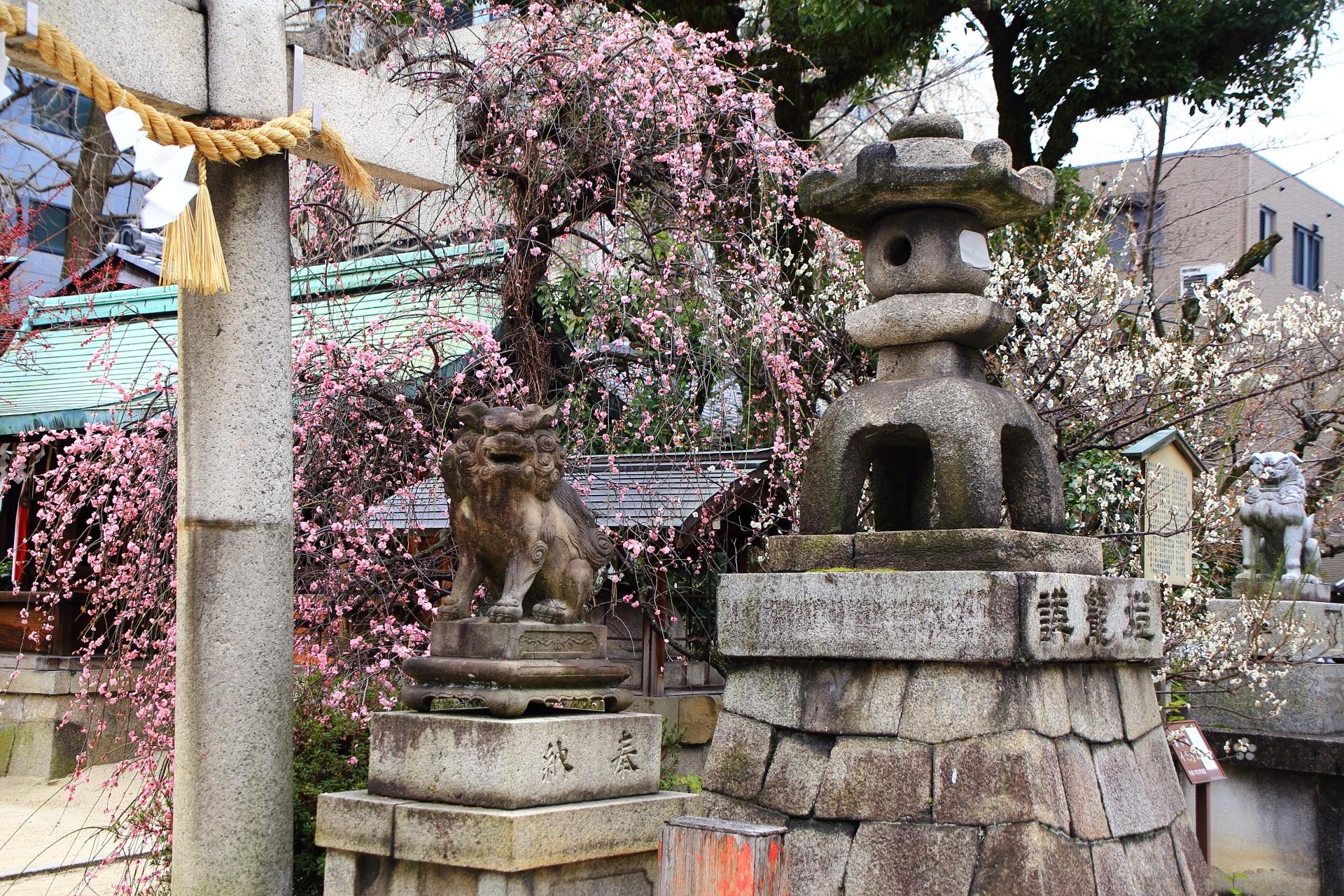 高画質 写真 梅 菅大臣神社