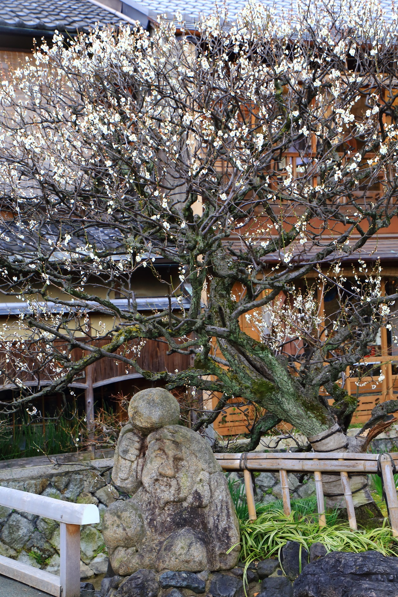 Kyoto Gion-Shirakawa plumblossom