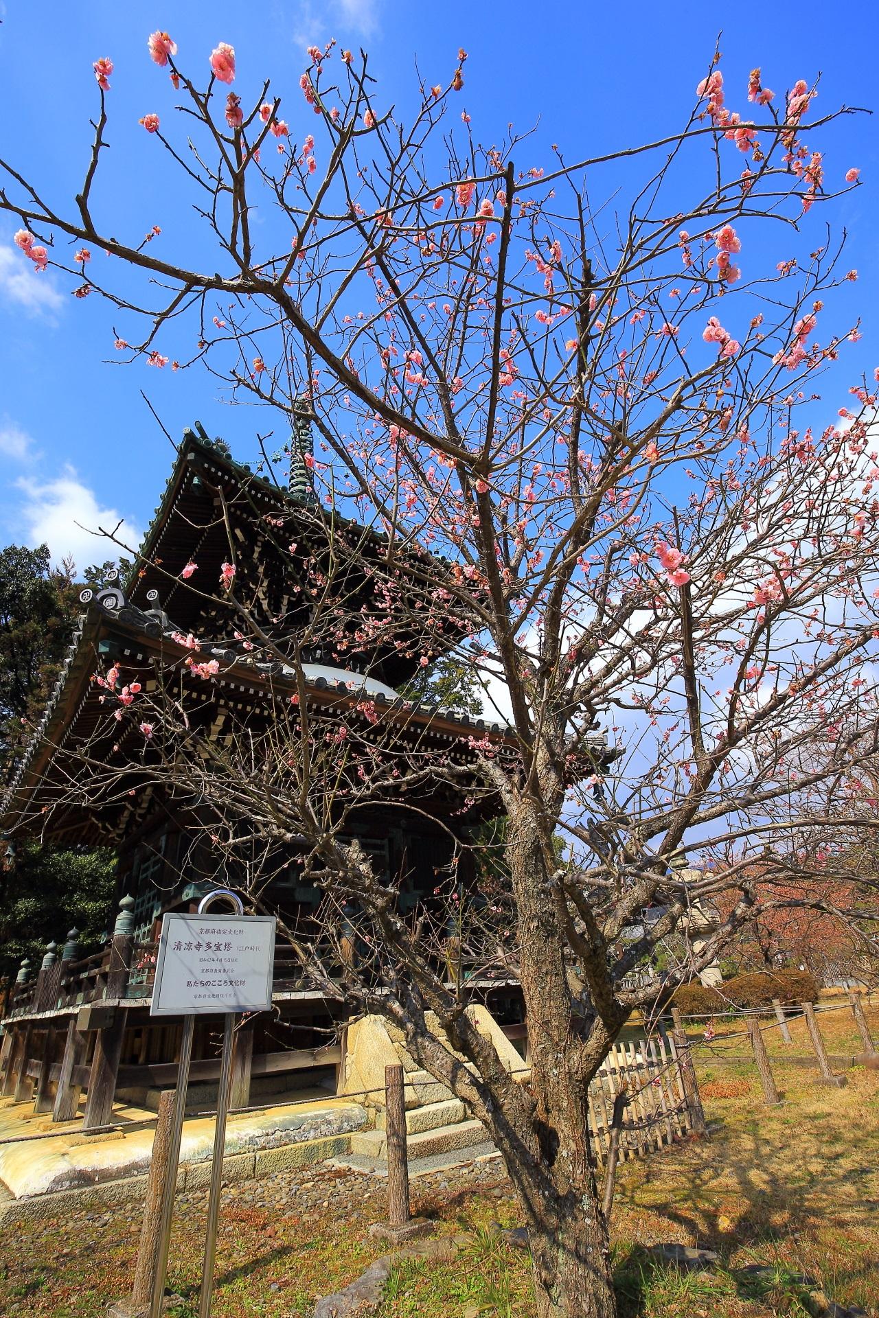 Kyoto Seiryoji-Temple plumblossom