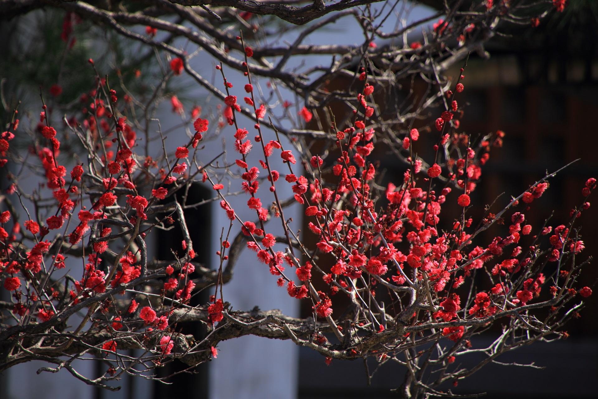 芸術的な造りの梅の枝と花