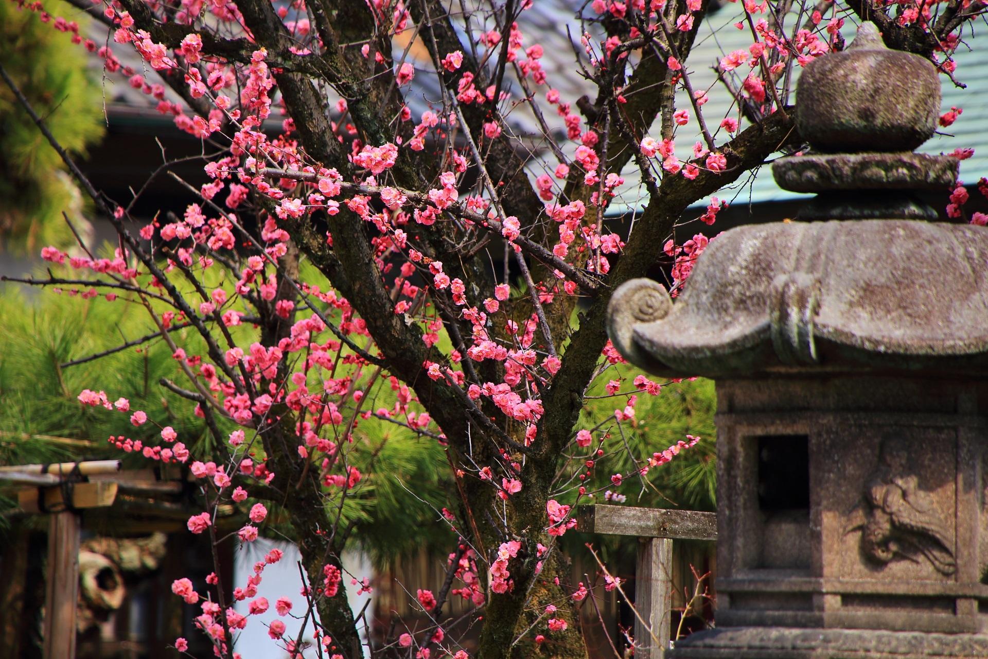 下御霊神社の燈籠と梅の花