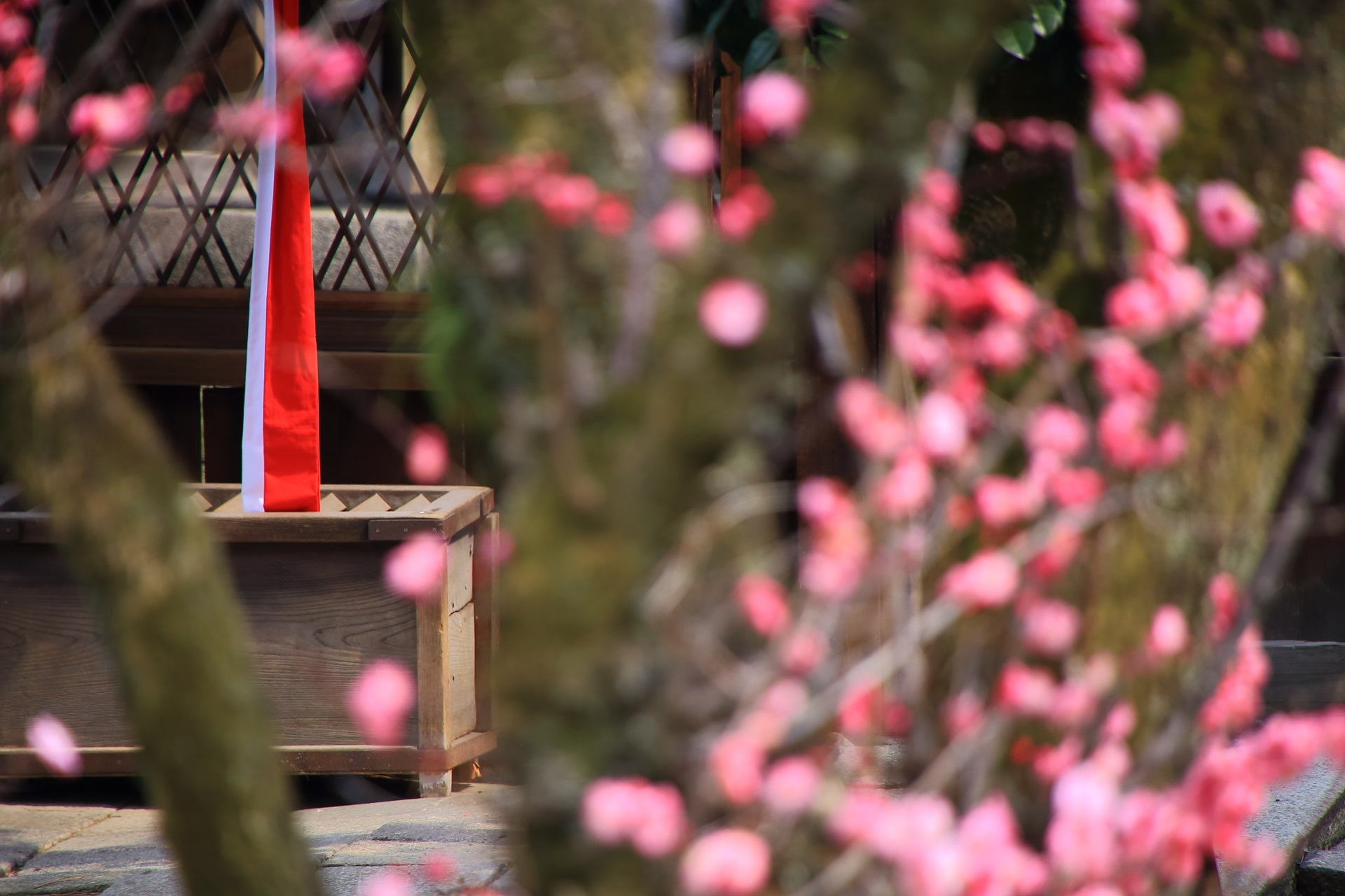 下御霊神社の末社と見ごろの梅