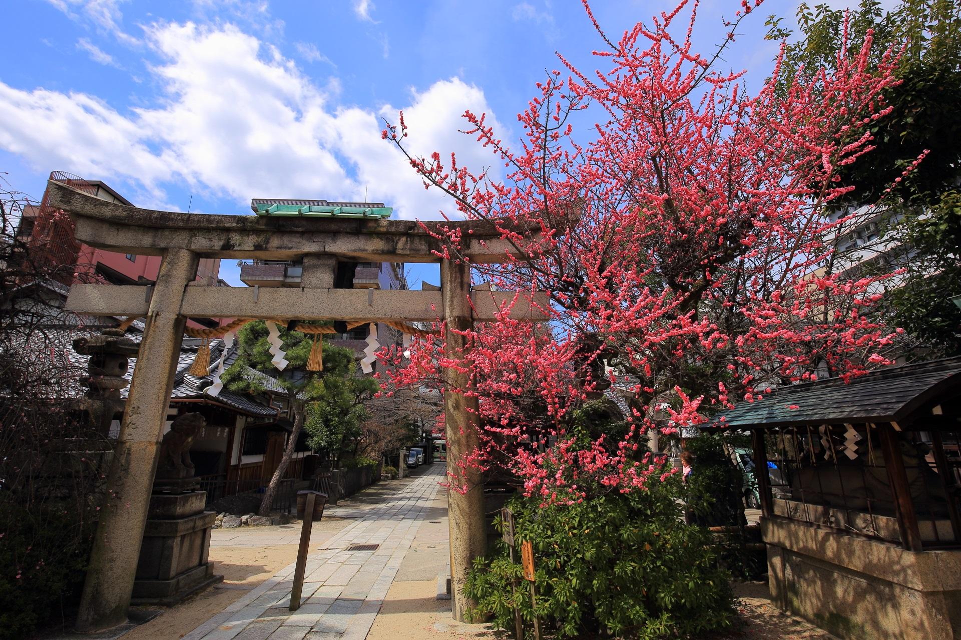 街中の梅の隠れた名所の菅大臣神社
