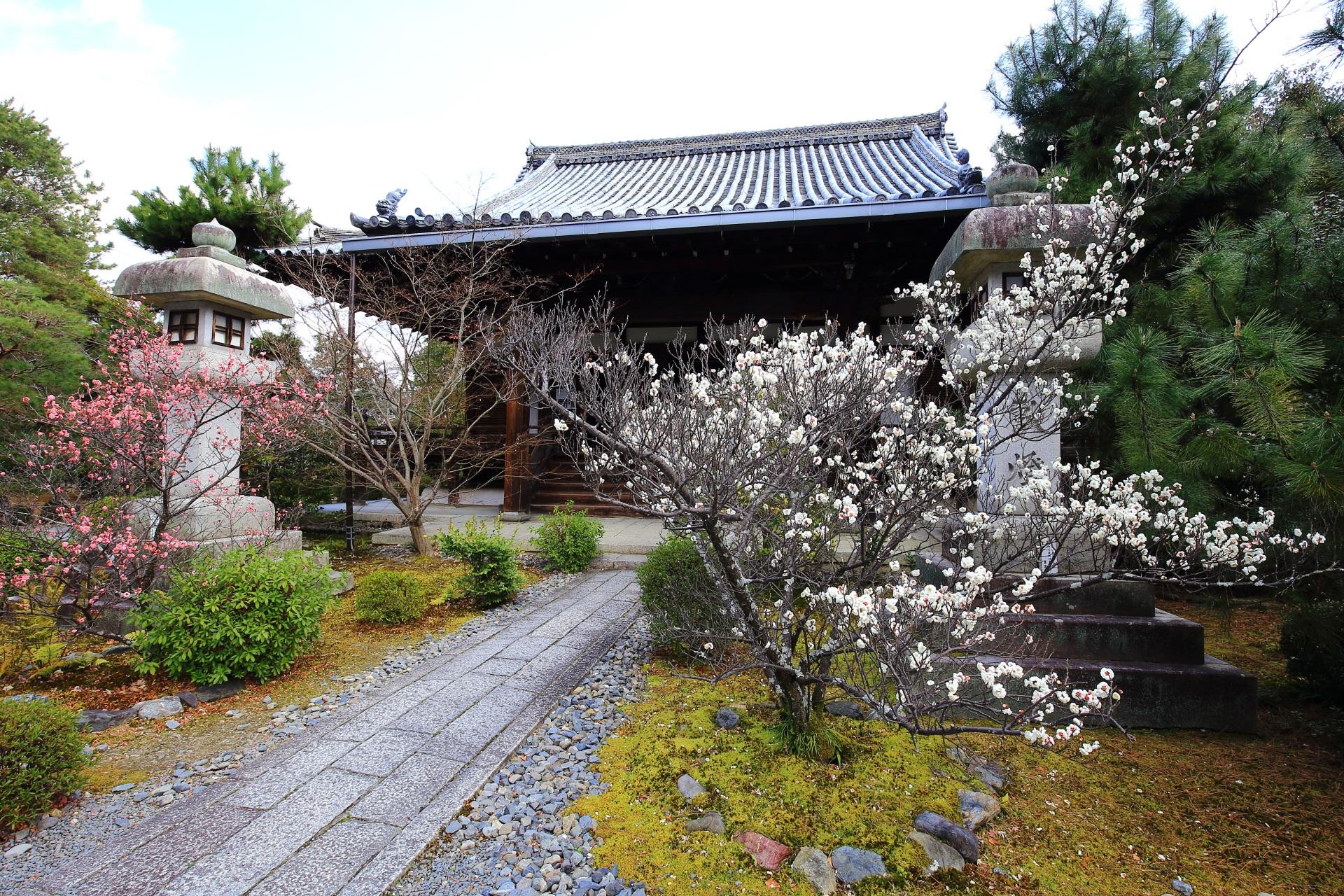 嵯峨釈迦堂(清涼寺)の素晴らしい梅と情景