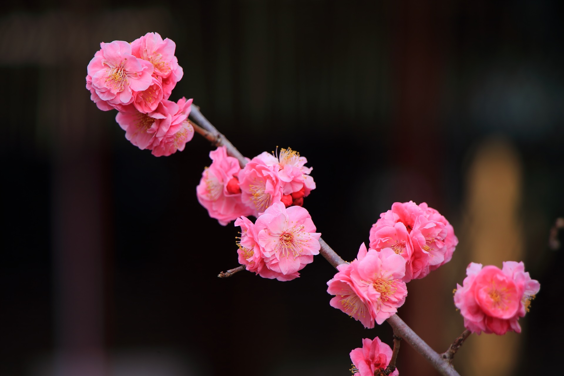 繊細で可愛いピンクの花