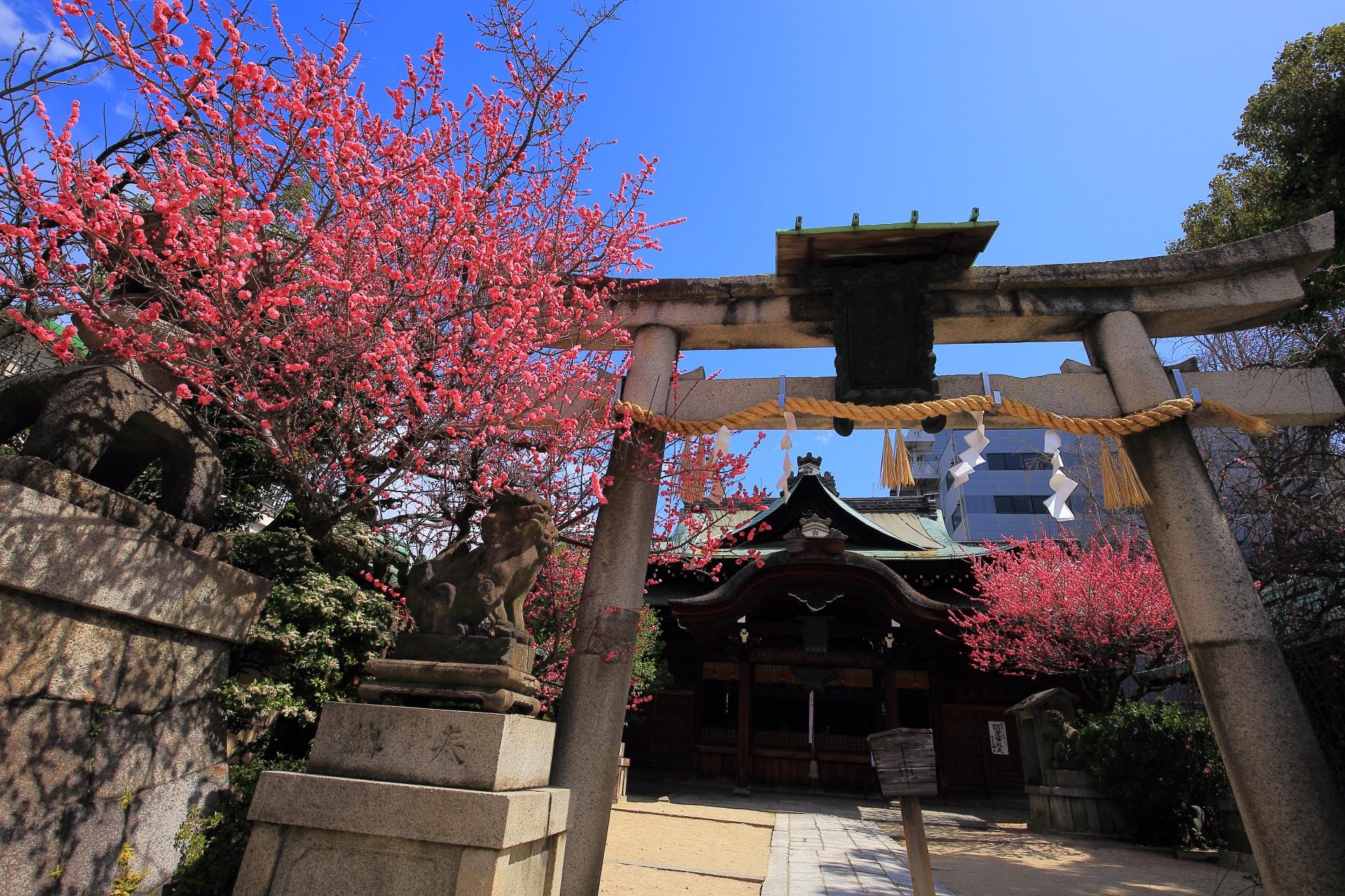 菅大臣神社の素晴らしい梅の花と春先の情景