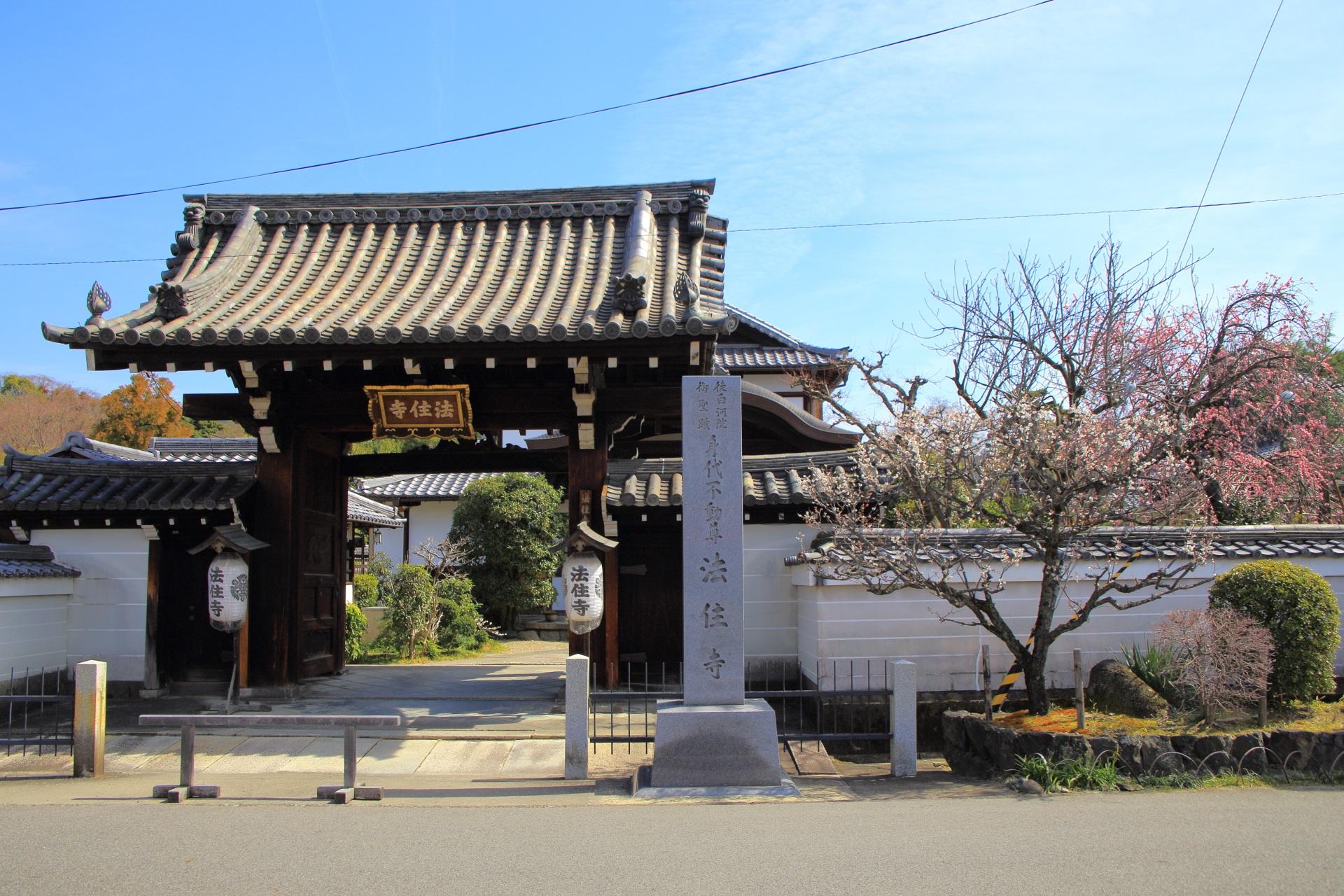法住寺の表門と白梅
