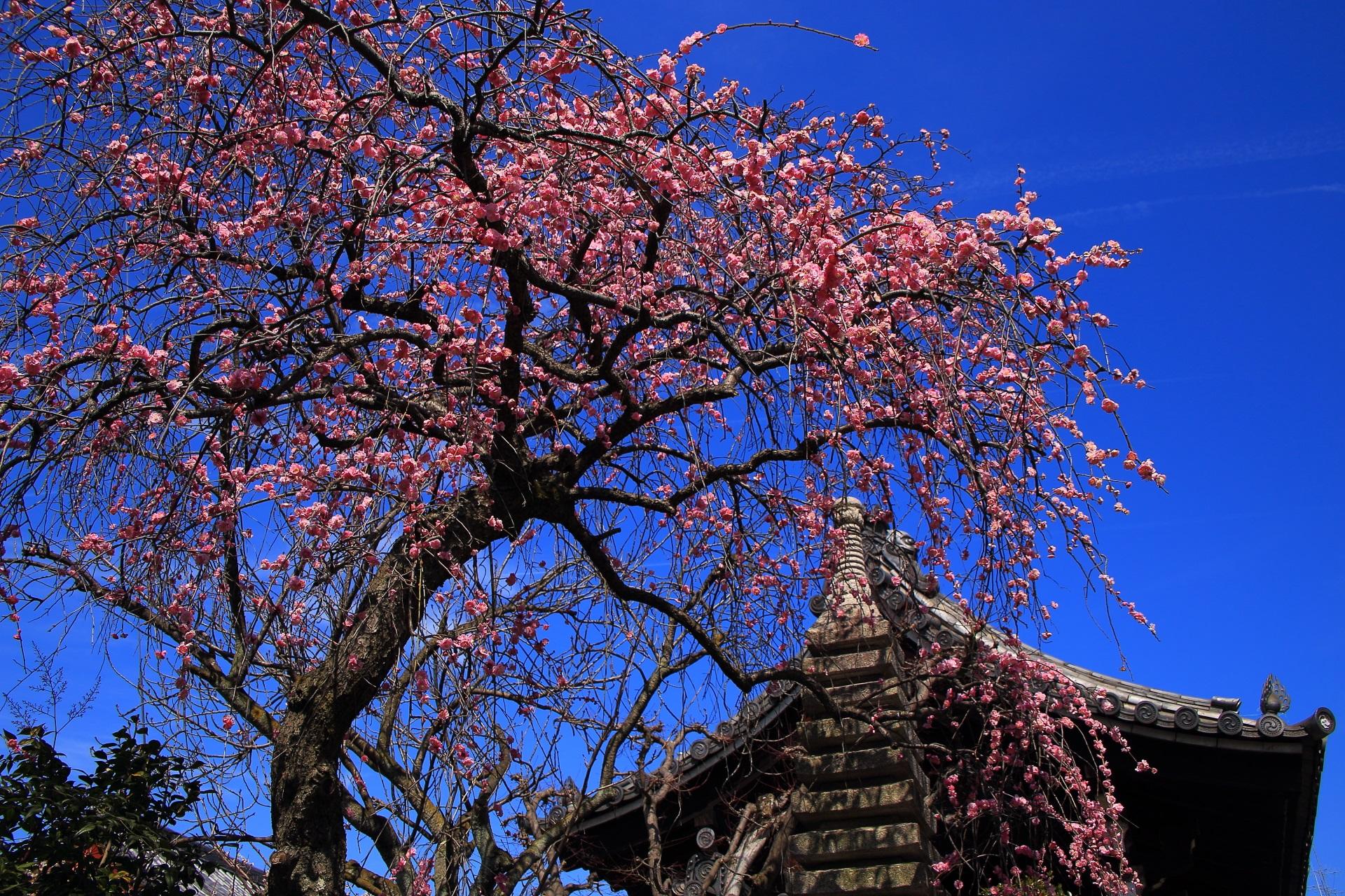 青空からふりそそぐピンクの花のシャワー
