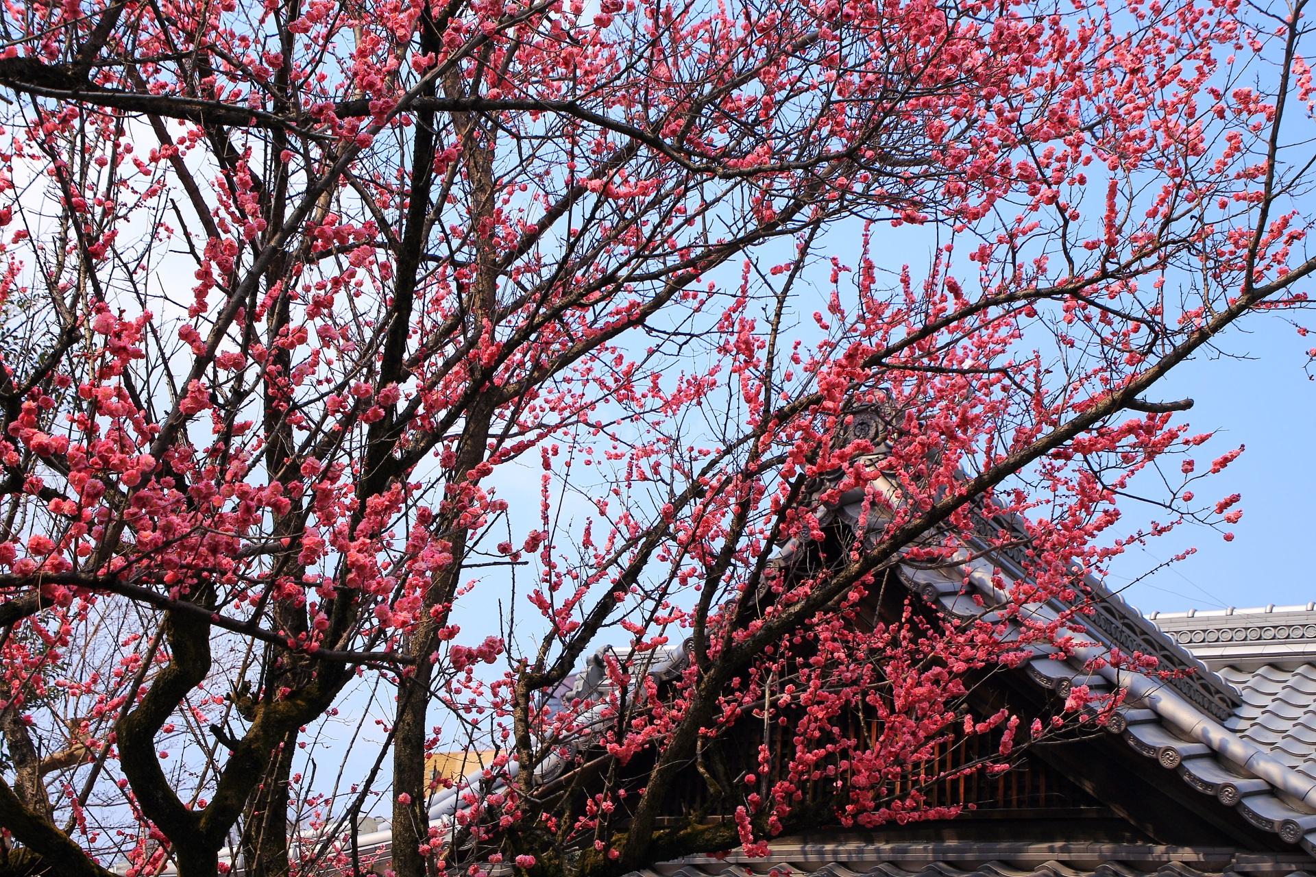 空をそめる春先の彩り