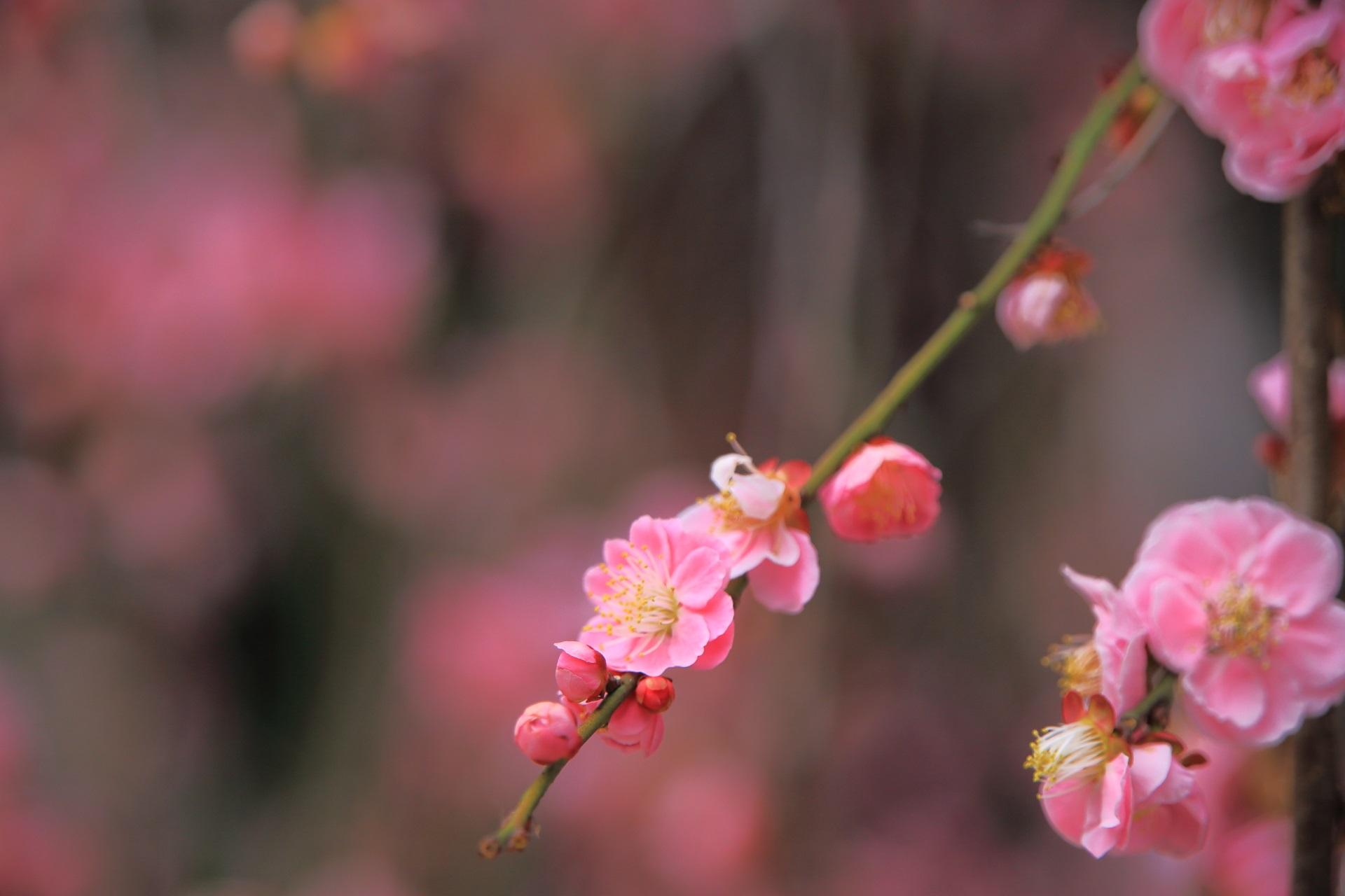 非常に繊細な花びら一枚一枚