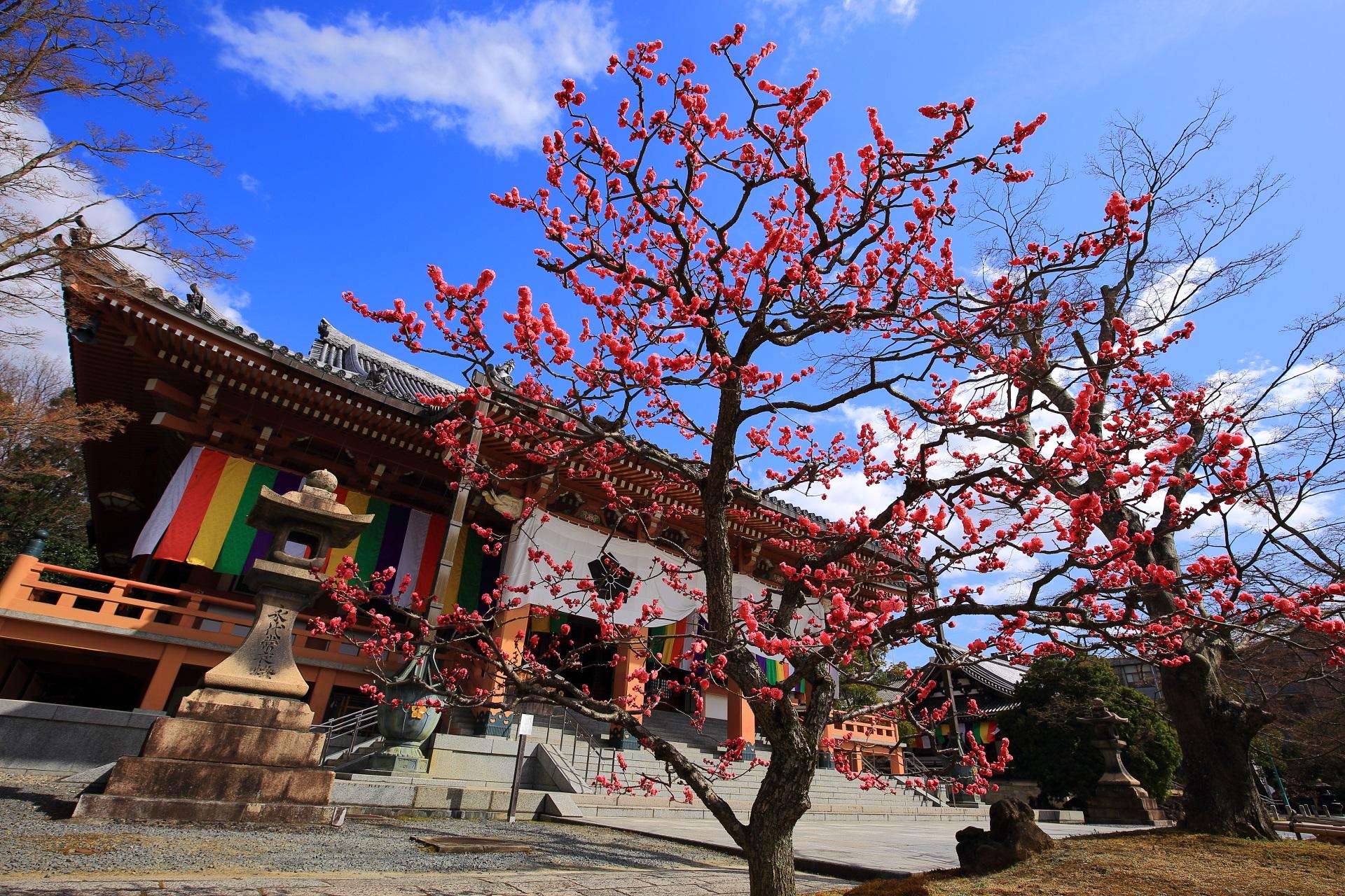 智積院の素晴らしい梅と情景