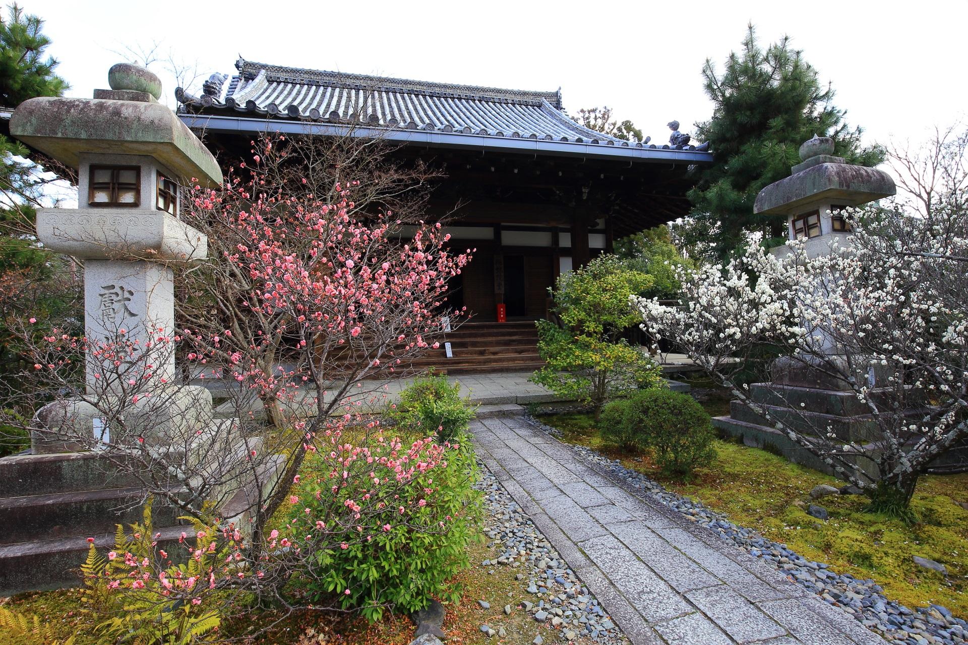 嵯峨釈迦堂のピンクの梅の花