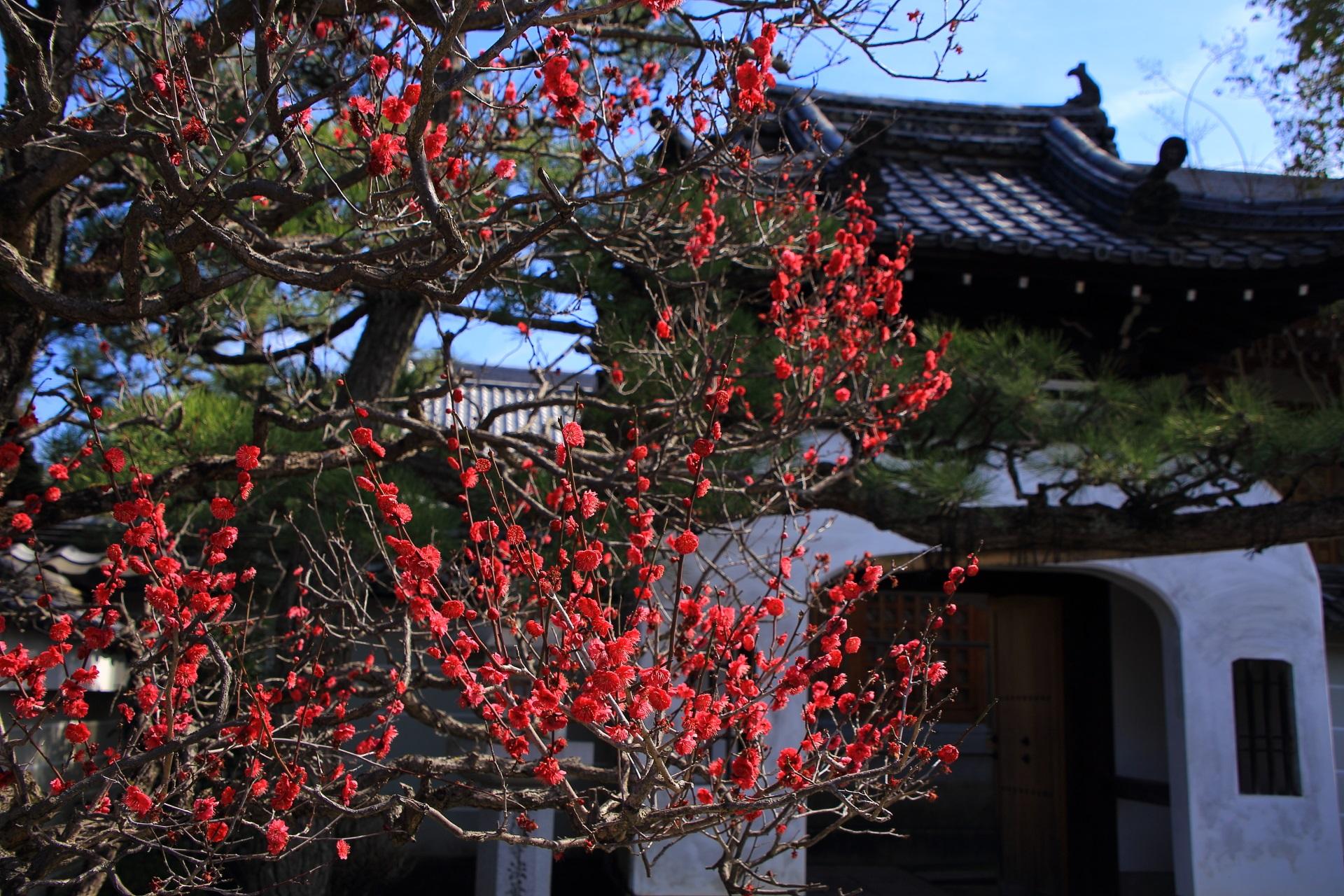 龍宮門と紅梅