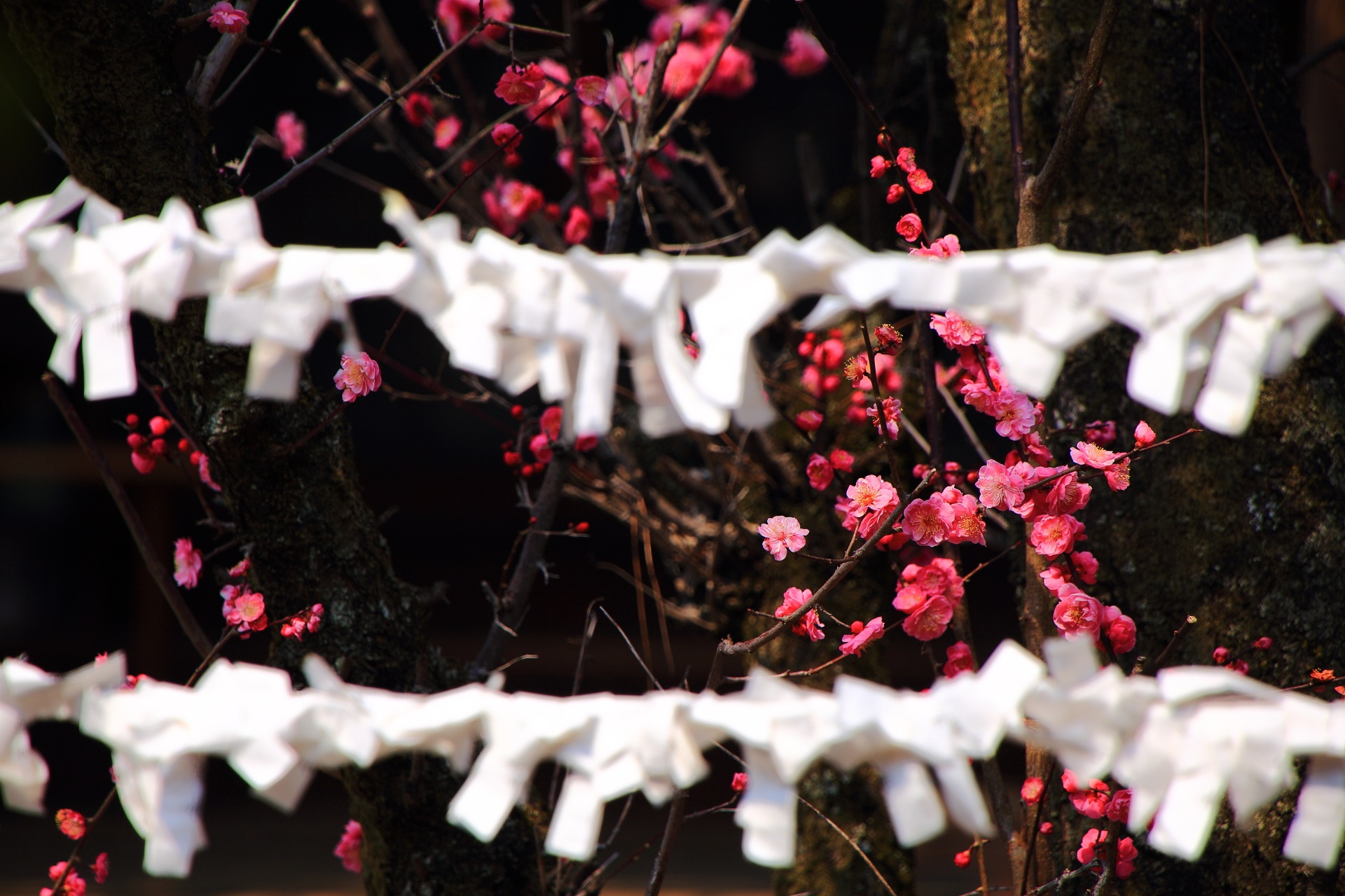 ピンクと白の華やかなコントラスト