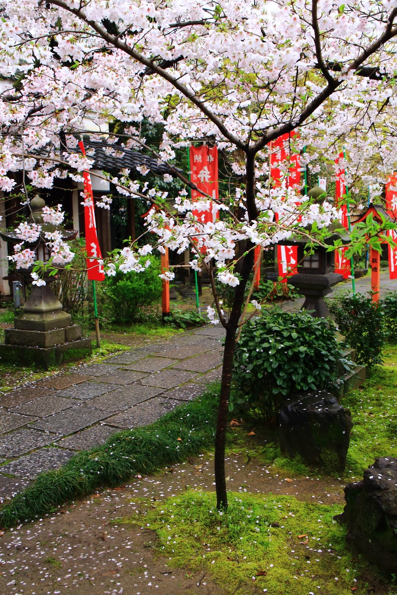 雨の日の情緒ある桜の境内