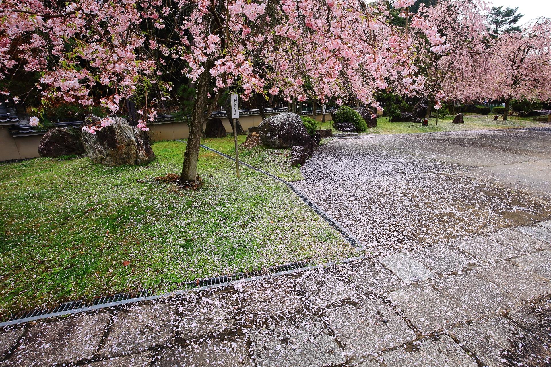 綺麗な散り桜