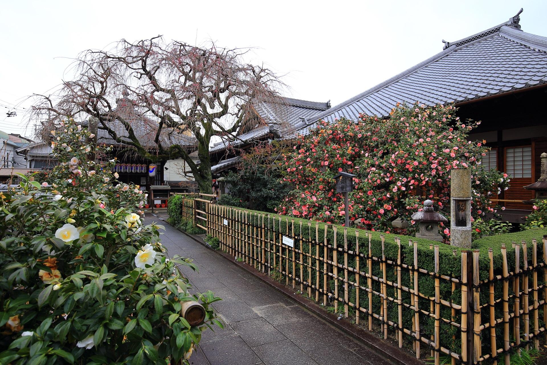 圧倒的な椿の地蔵院