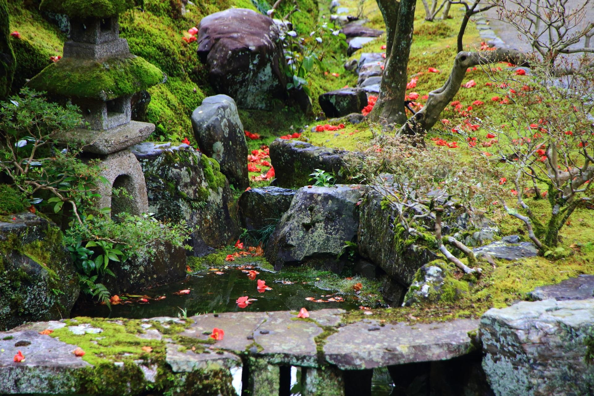 落ち着いた庭園に彩りをそえる鮮やかな散り椿