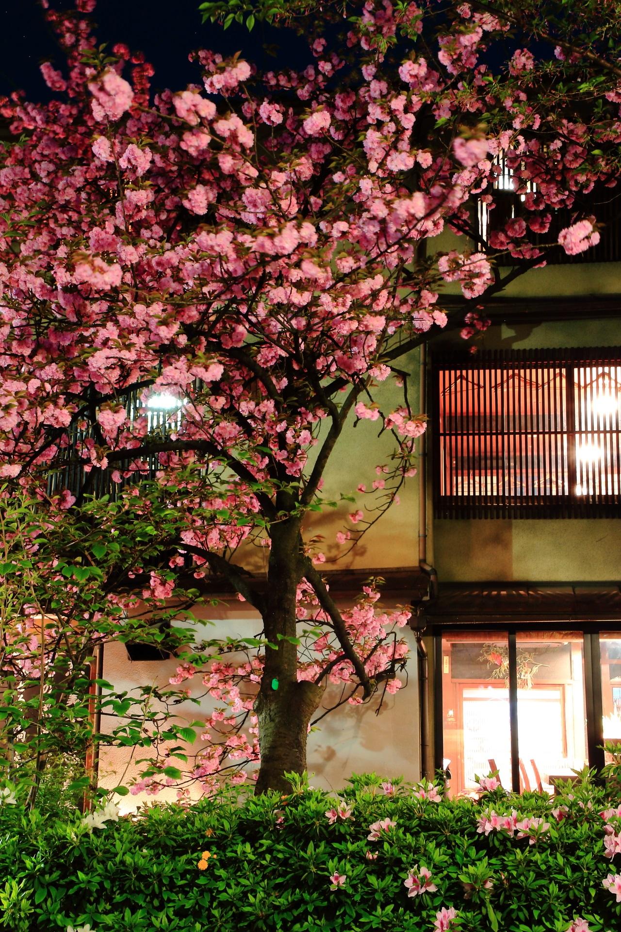 毎年桜の時期にはライトアップが行われる高瀬川と木屋町通