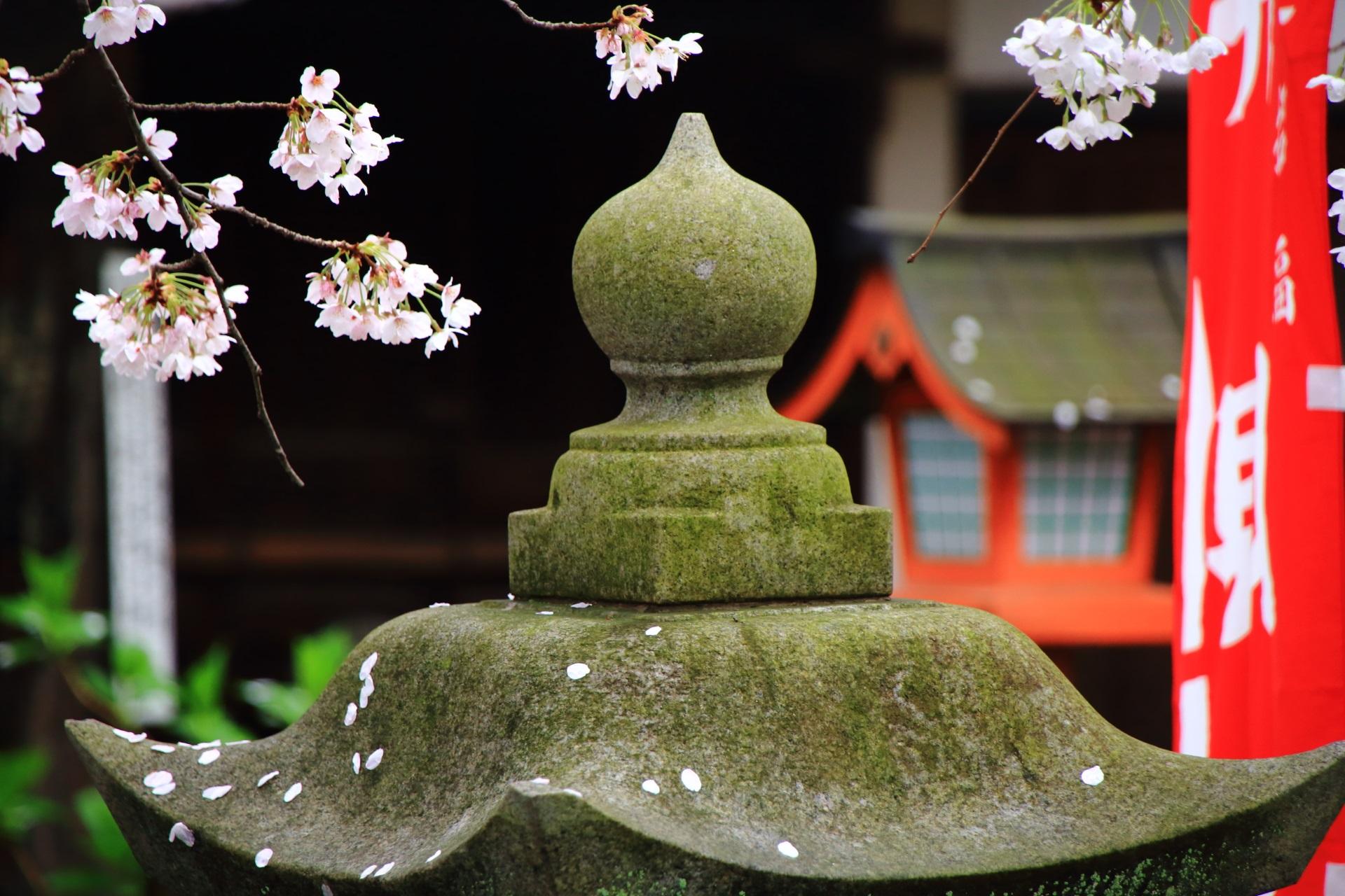 花びらの散った燈籠と桜
